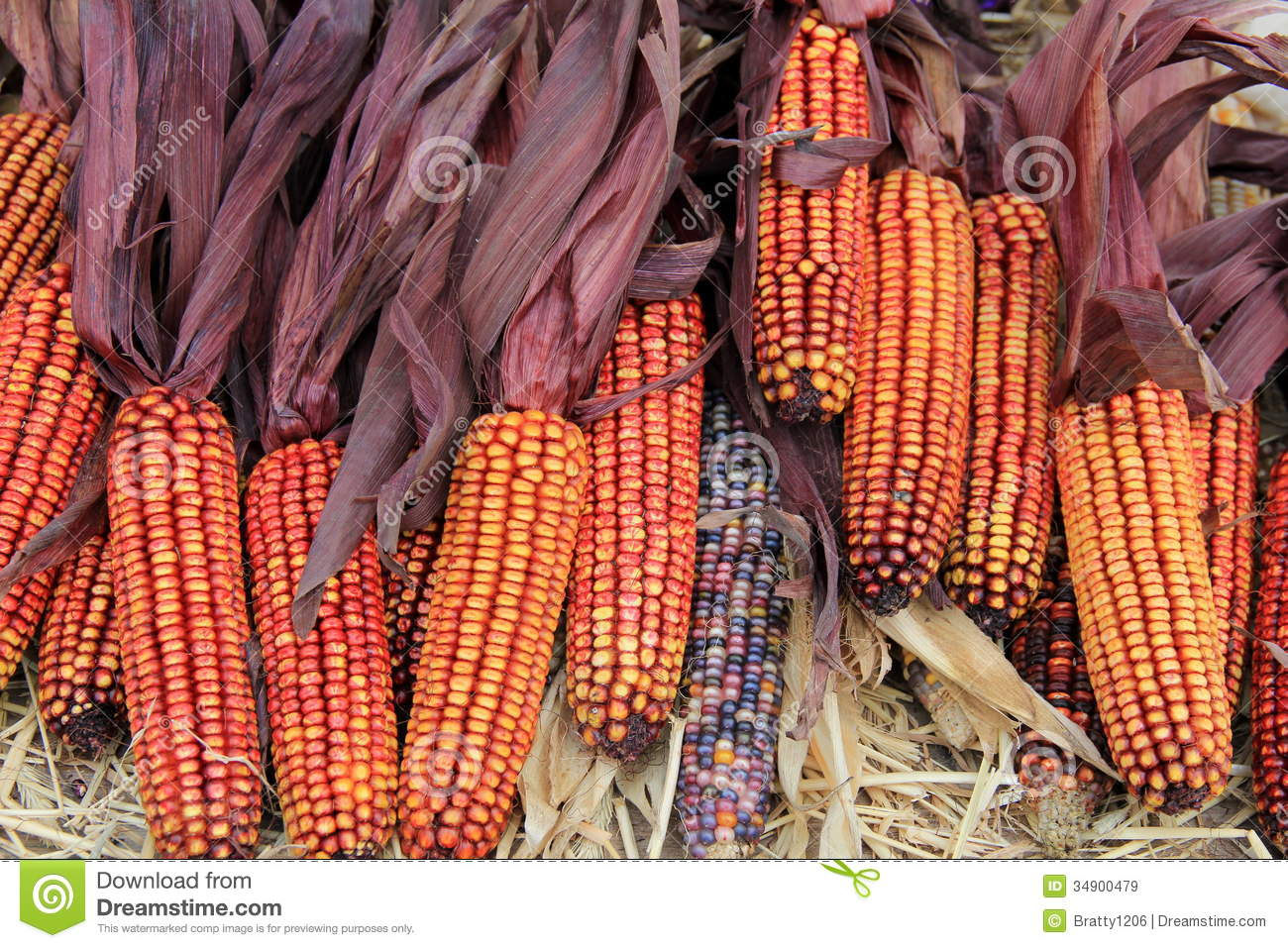 Gorgeous Color Of Indian Corn Royalty Free Stock Images