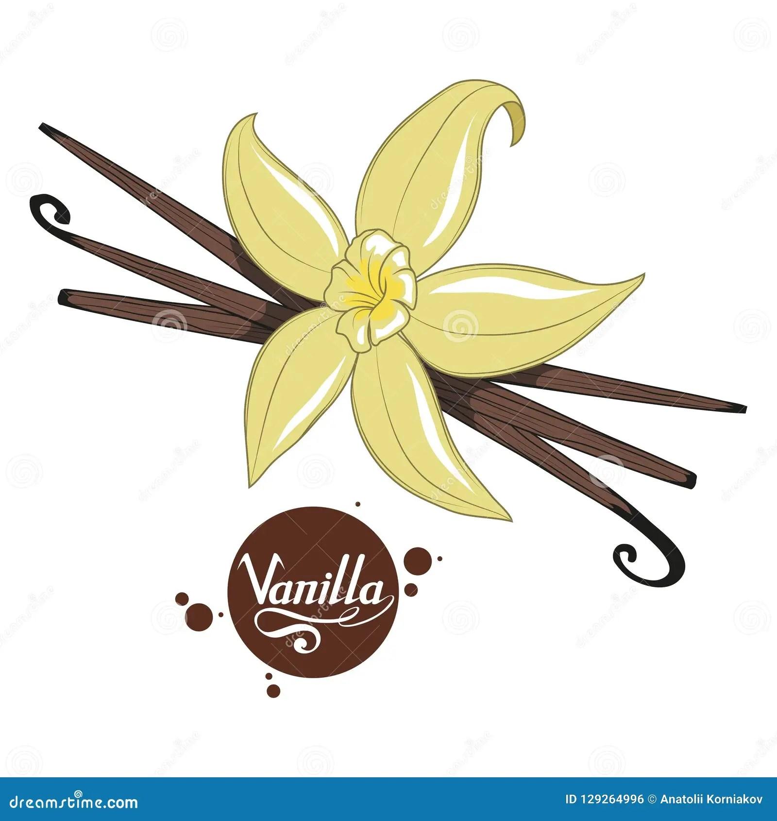 gousses de vanille tirees par la main