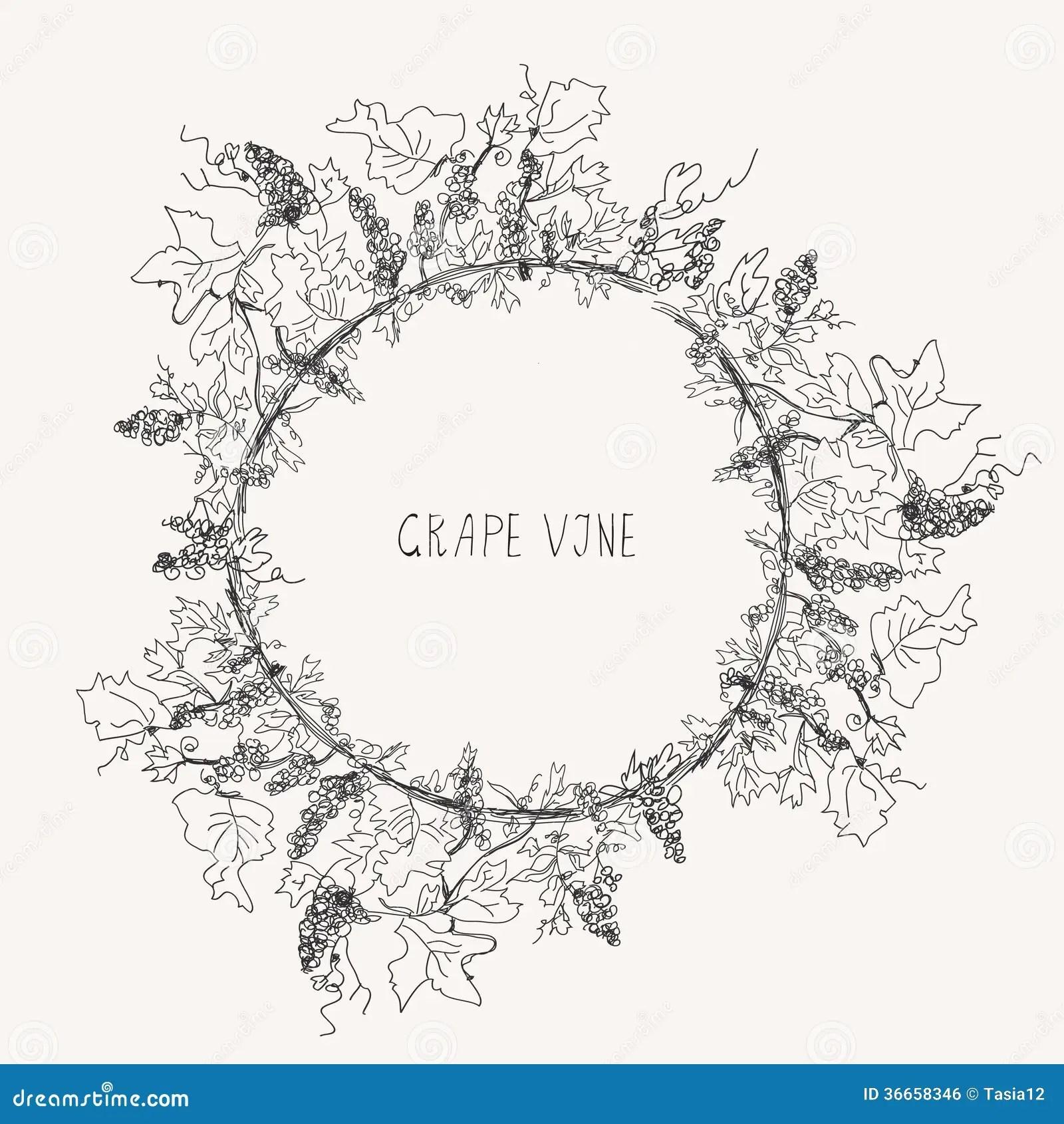 Grape Vine Sketch Frame Round Royalty Free Stock Image
