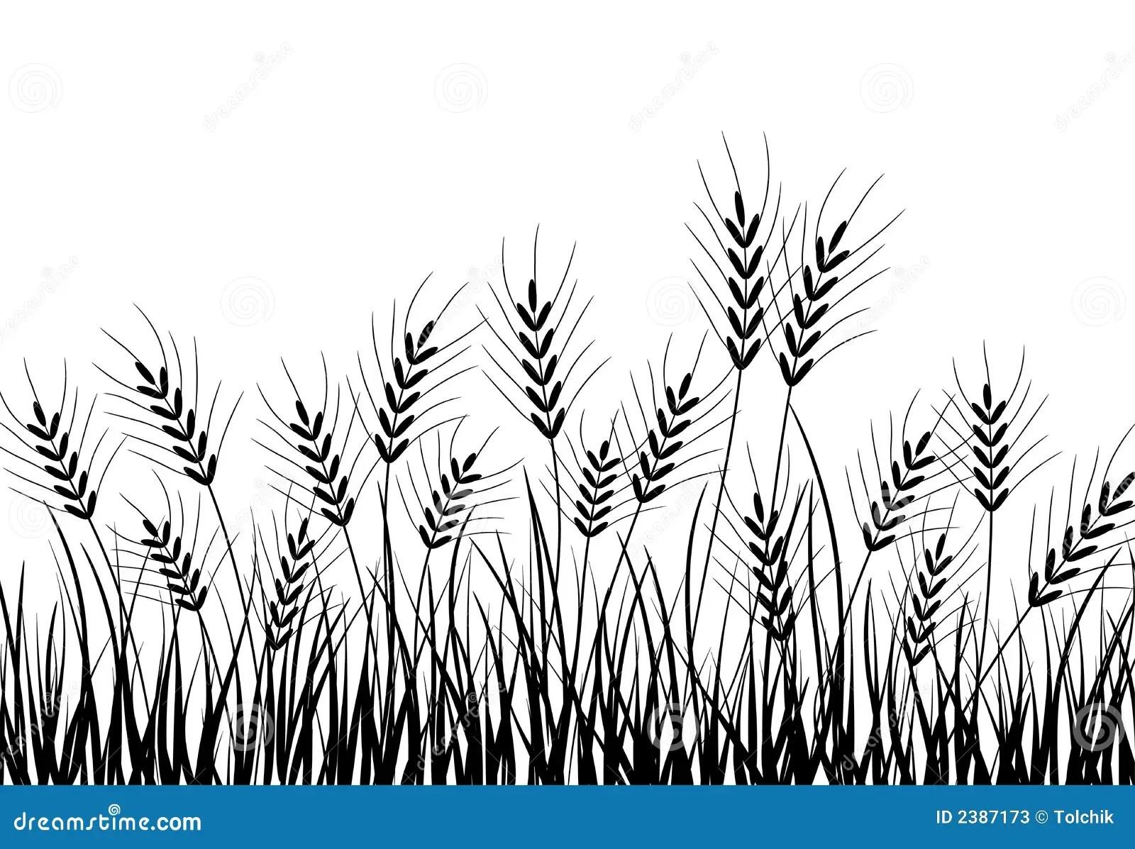 Gras Und Ohren Vektor Vektor Abbildung Illustration Von