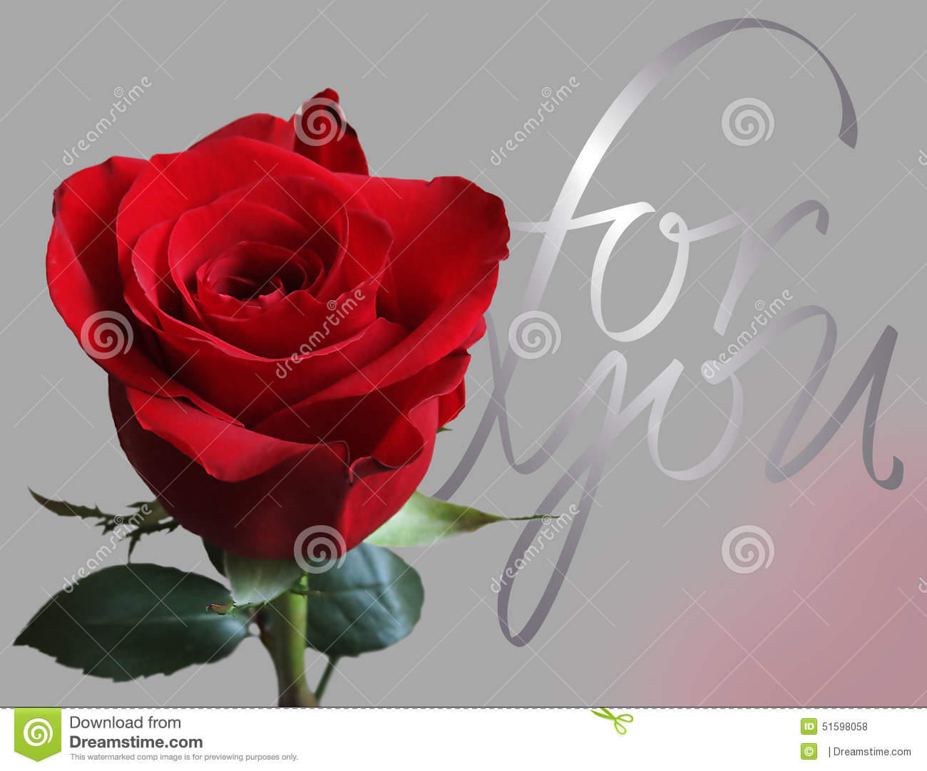Greeting Card With Rose Stock Photo Image 51598058