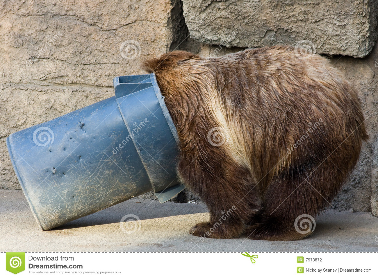 Grizzly Bear Digging In A Trash Can Stock Photo Image Of
