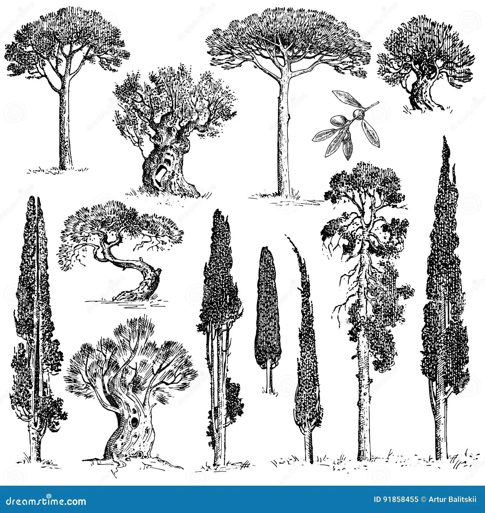 Gro Er Satz Von Graviert Hand Gezeichnete Baume Umfassen