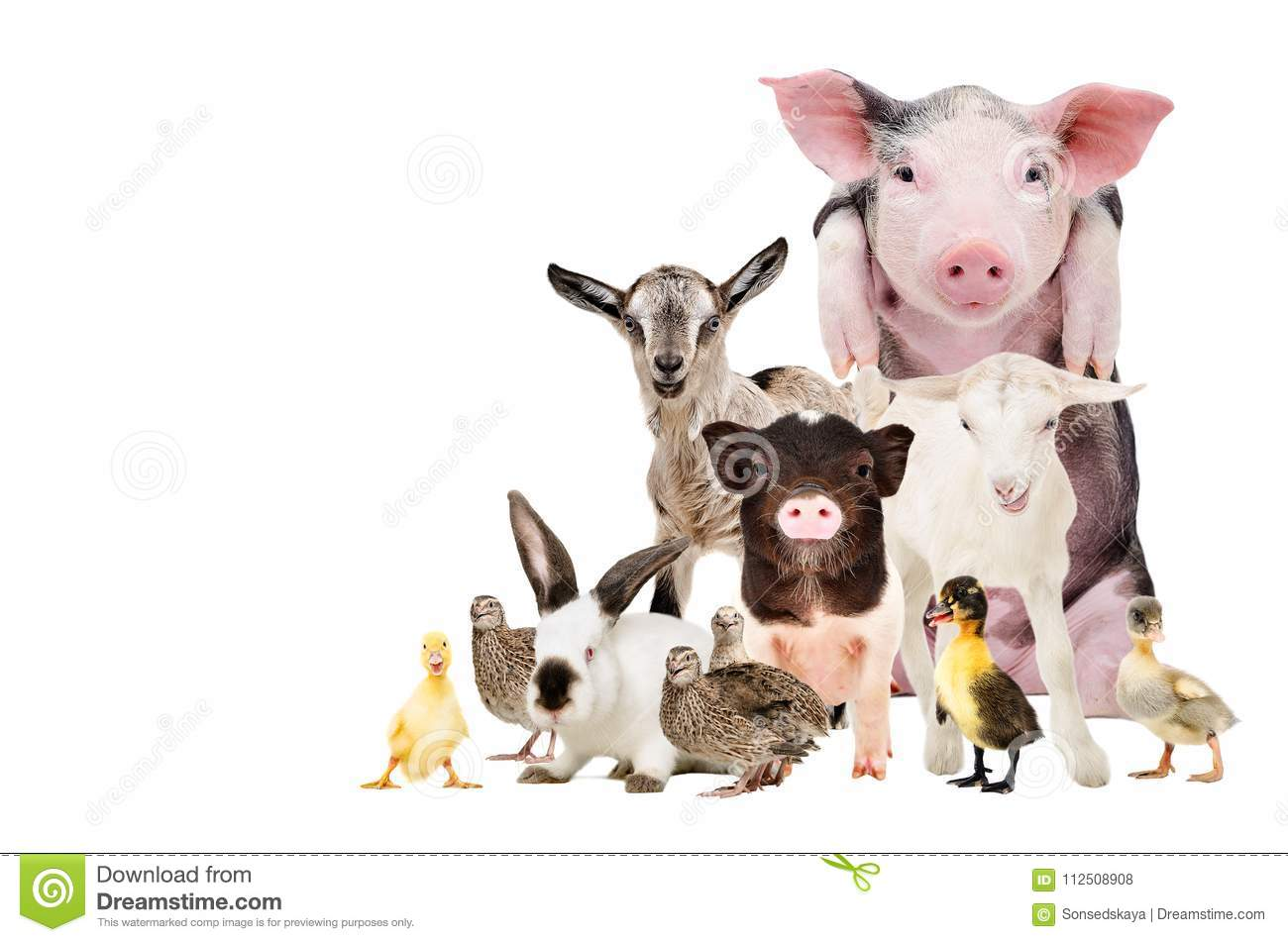 Group Of Cute Farm Animals Stock Photo Image Of Farm