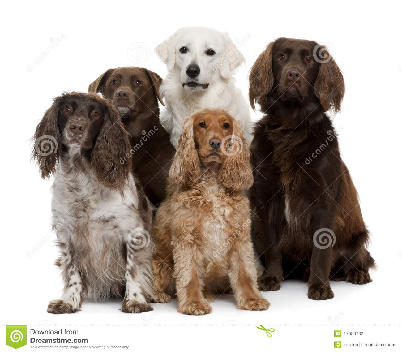 Group Of Dogs Stock Photography Image 17038782