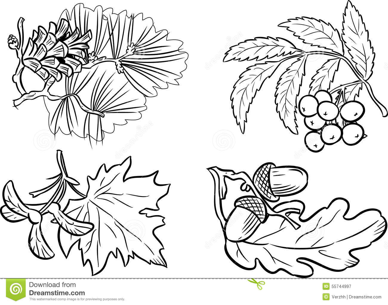 Coloring Pictures Of Diffe Types Leaves