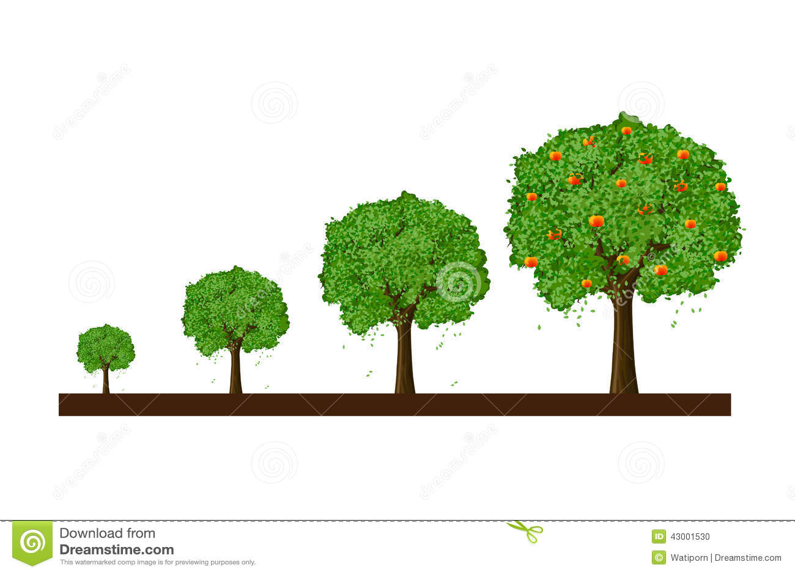 Growth Of Tree Stock Illustration