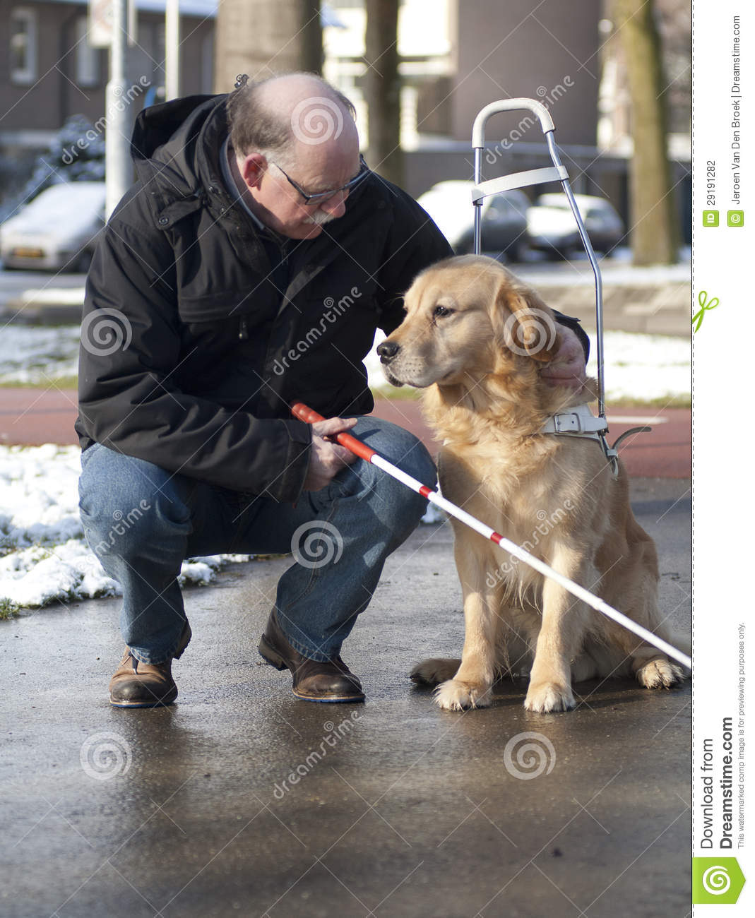 Guide Dog Is Helping A Blind Man Stock Photo Image 29191282