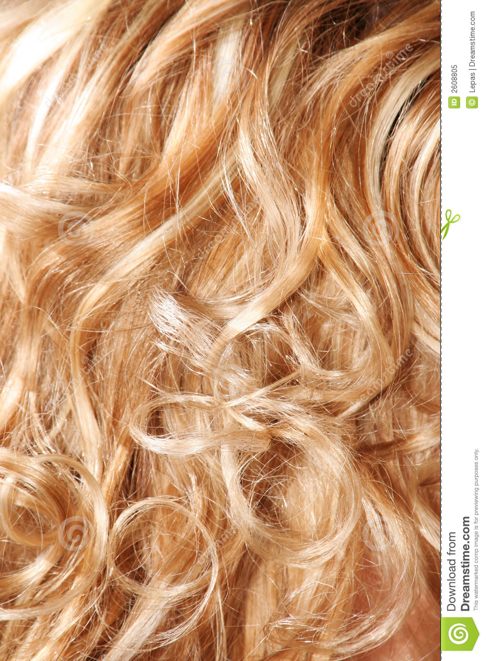 Hair Detail Royalty Free Stock Photo Image 2608805