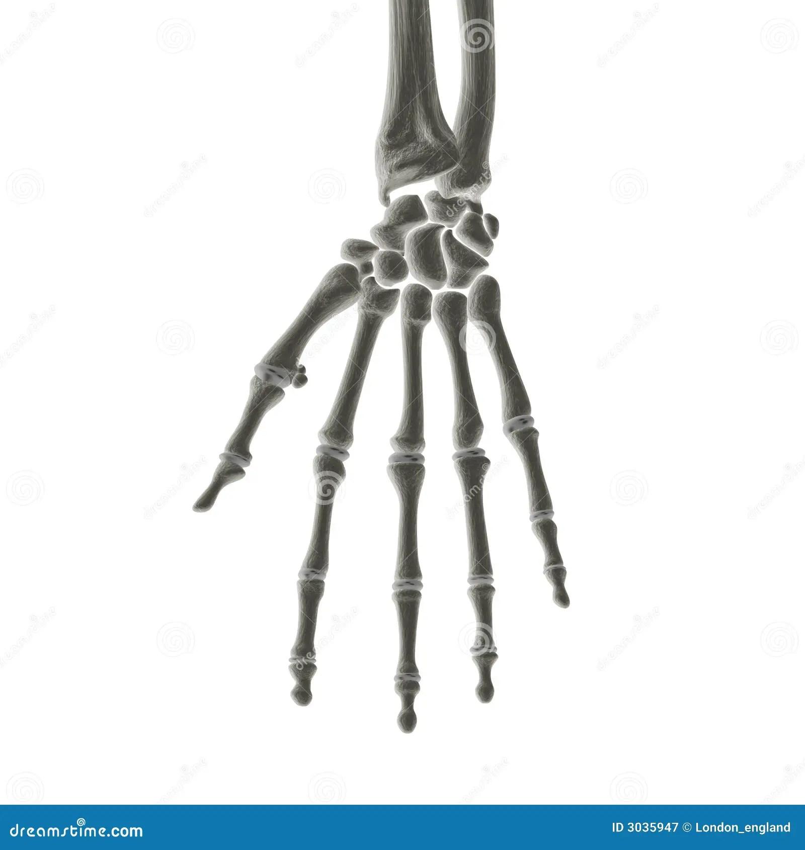 Hand Bones X Ray Stock Illustration Illustration Of Xray