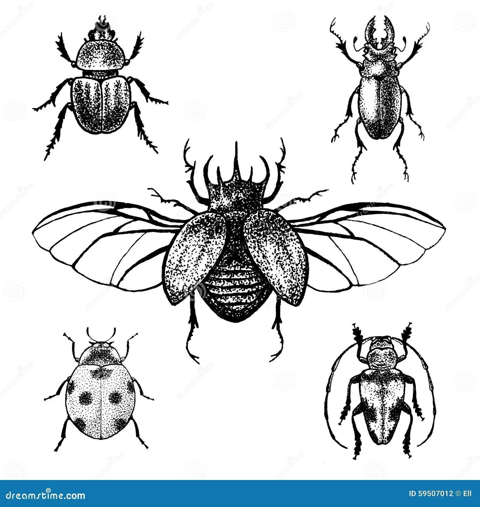 Hand Drawn Beetles Set Stock Vector Illustration Of