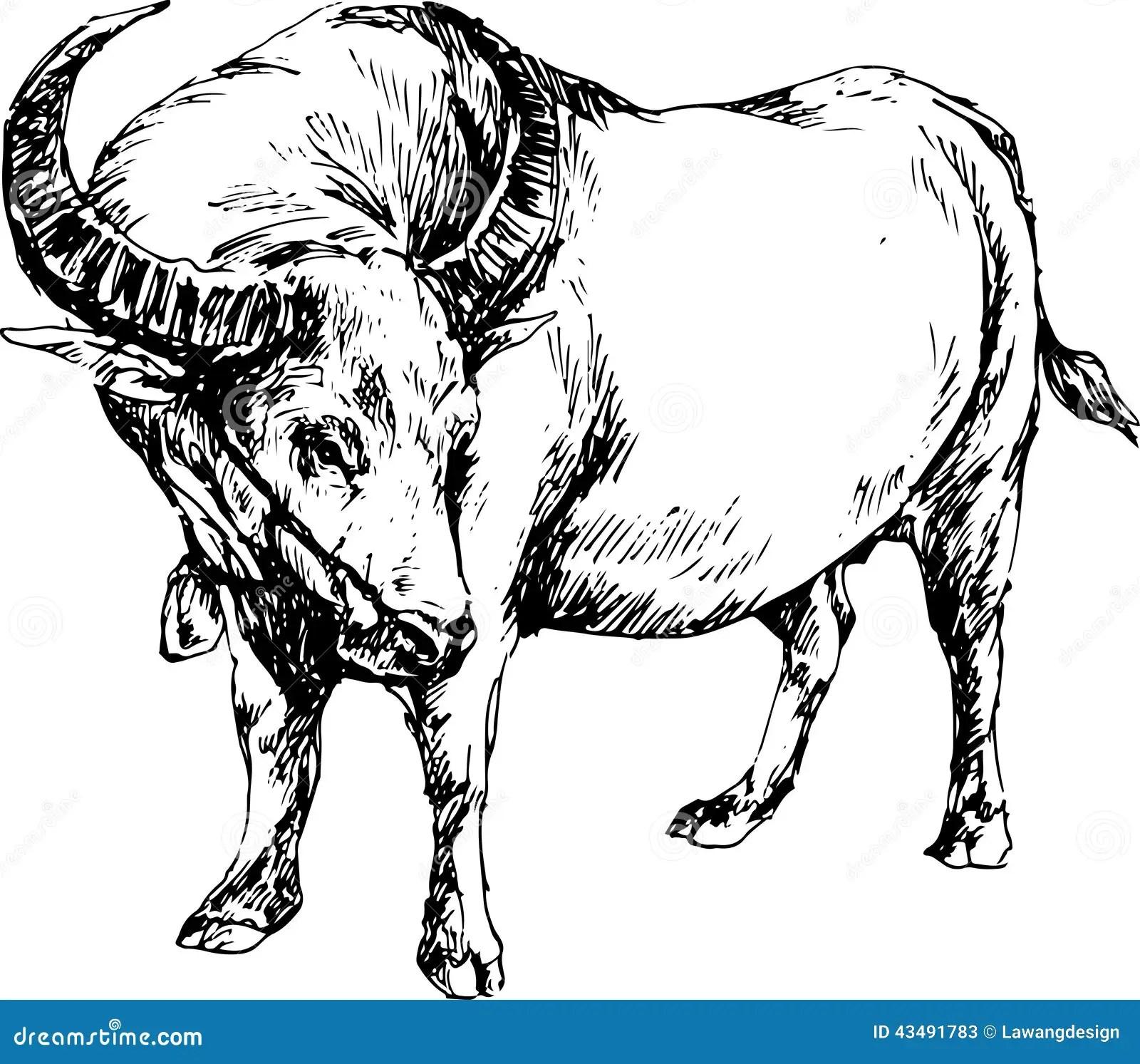 Hand Drawn Buffalo Stock Vector