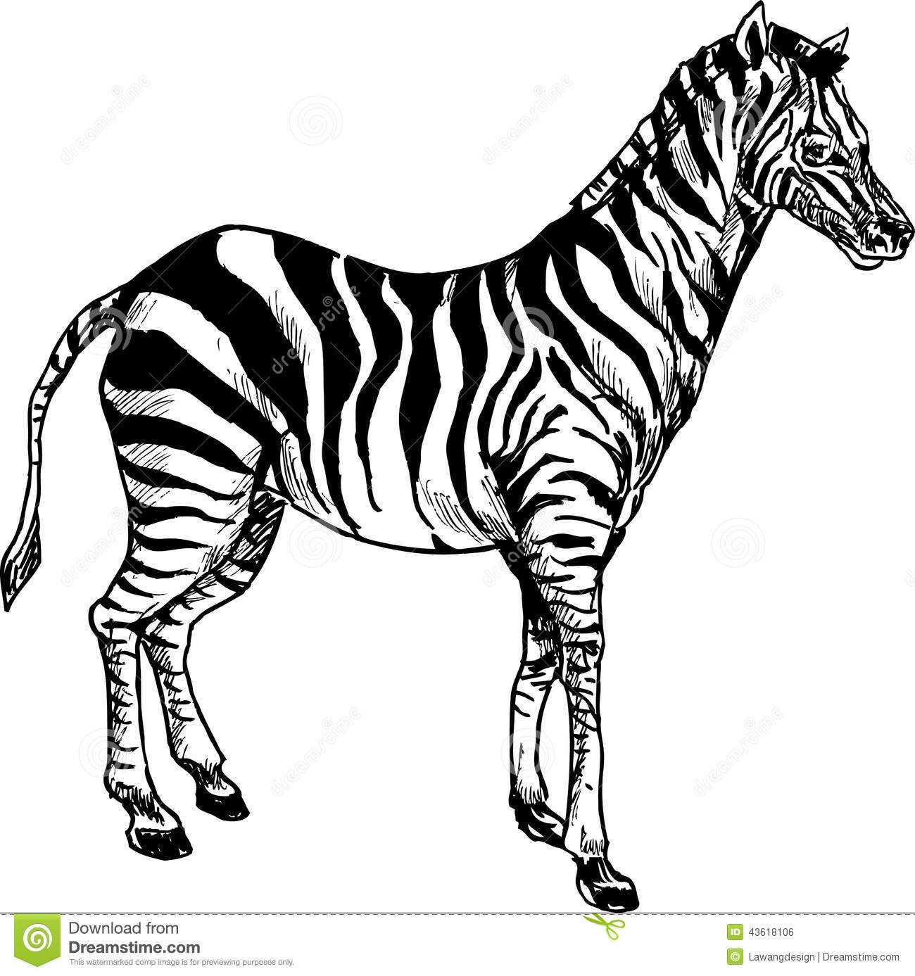 Hand Drawn Cute Zebra Cartoon Stock Vector