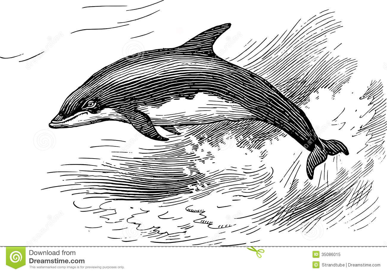 Royalty Free Stock Photo Dolphin Image