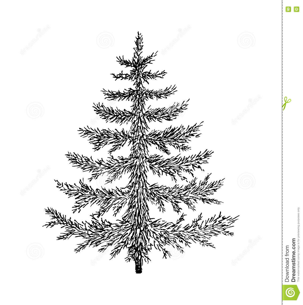 Hand Drawn Evergreen Tree Without Decorations Sketch