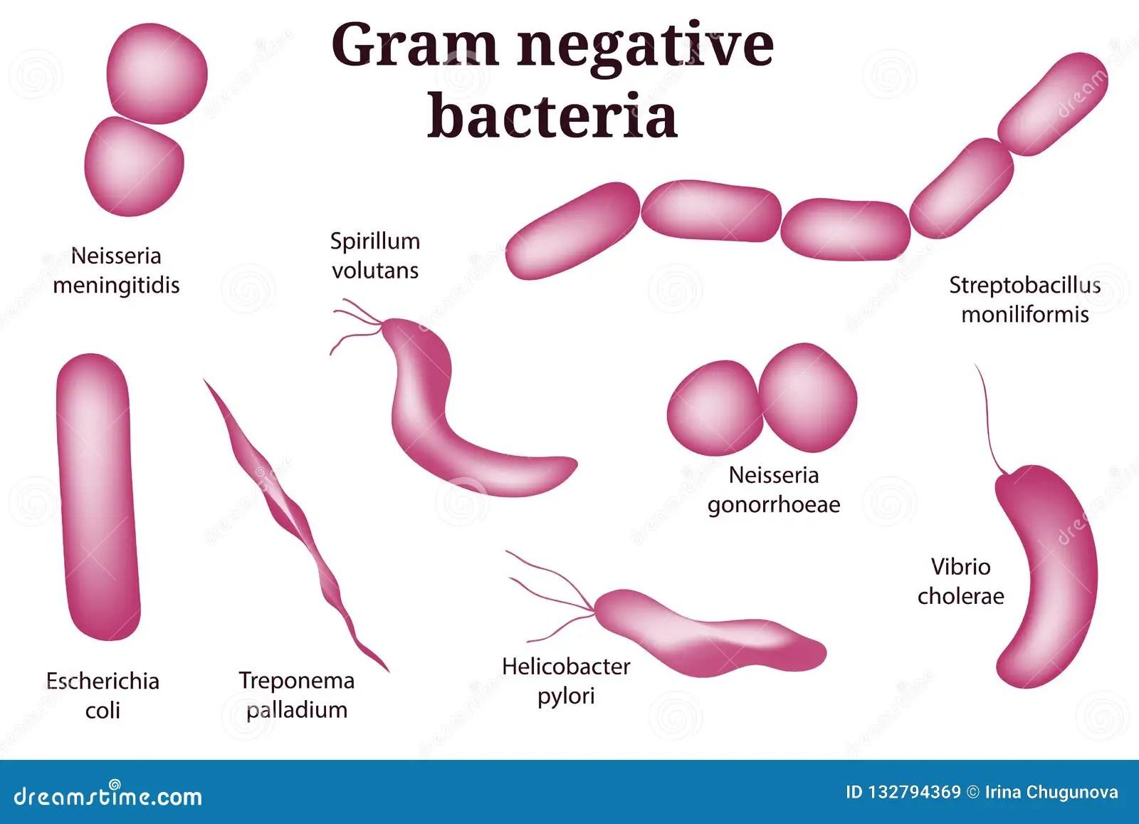 Hand Drawn Microbiology Set Arrangements Of Gram Negative