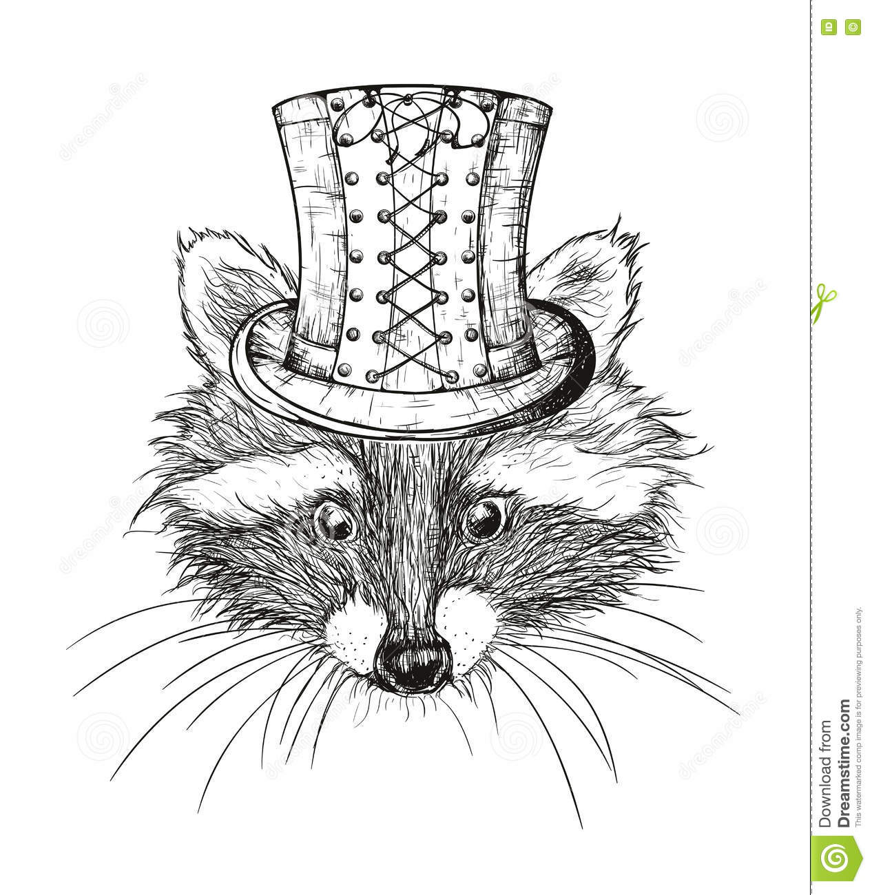 Hand Drawn Raccoon Stock Vector Illustration Of Character