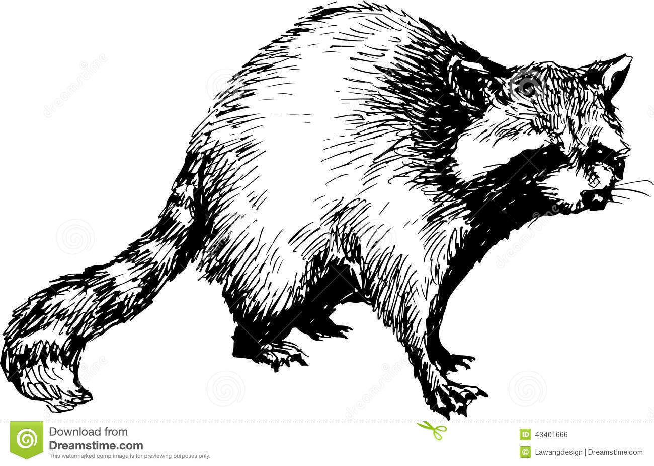 Hand Drawn Raccoon Stock Vector