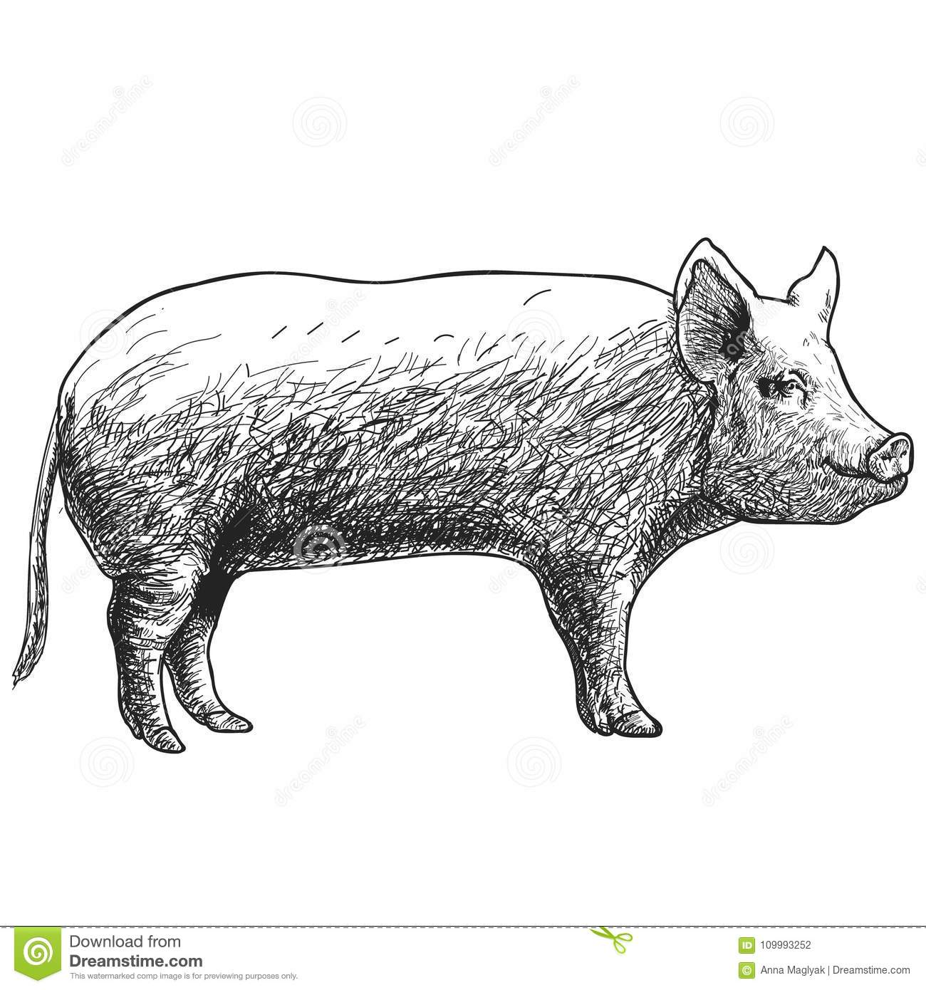 Sow With Piglet Royalty Free Stock Photography