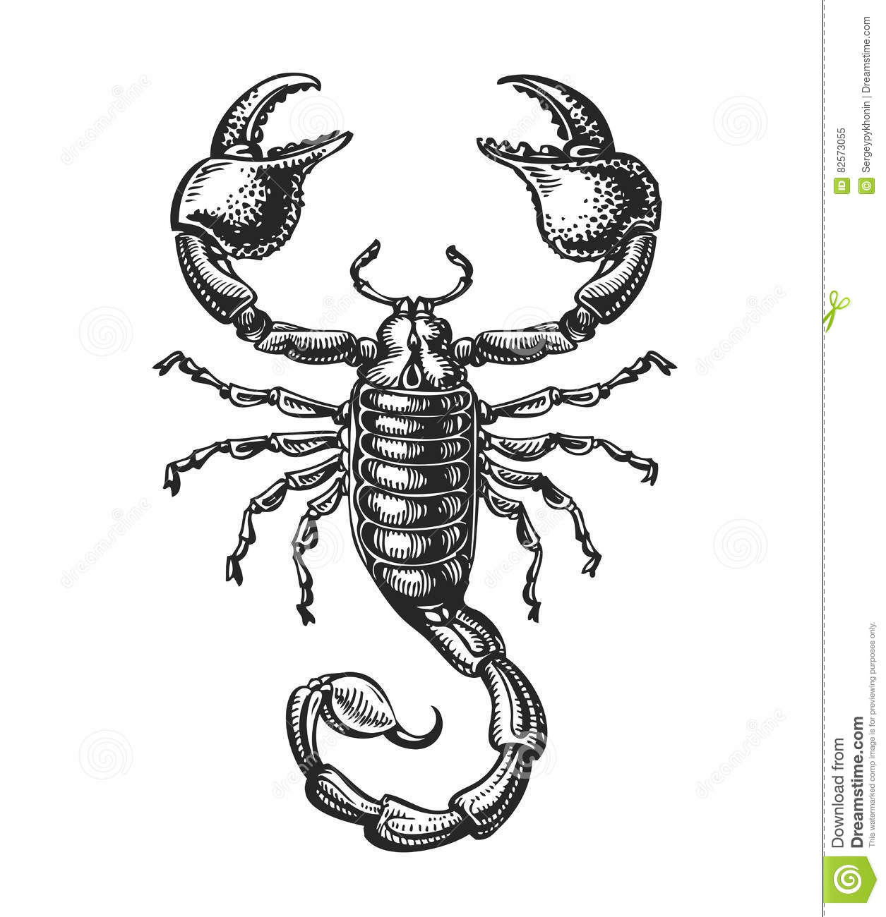 Hand Drawn Sketch Of Scorpion Tattoo Animal Vector