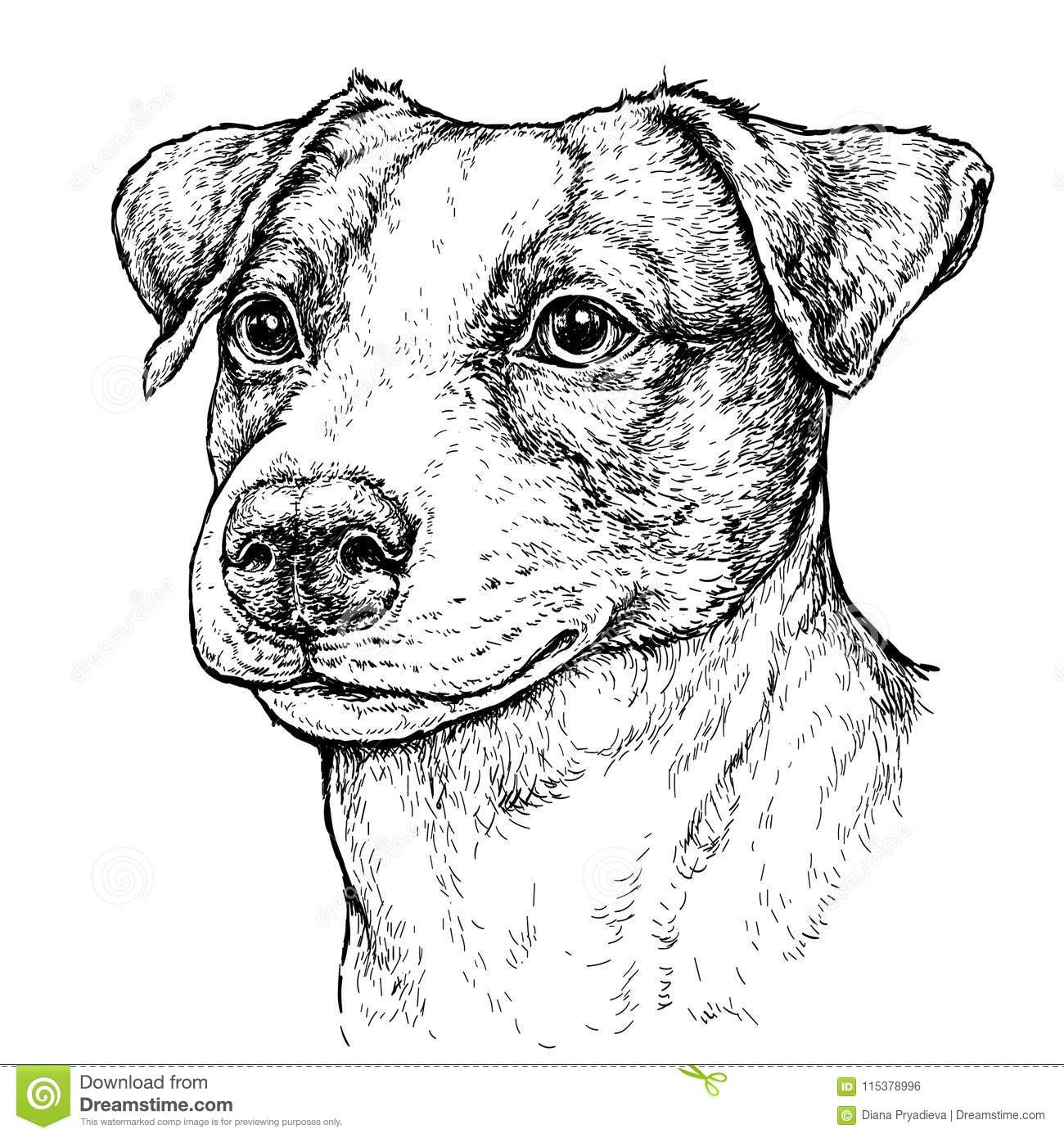 Hand Drawn Vintage Style Sketch Of Cute Funny Jack Russell