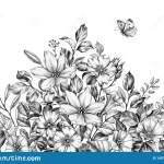 Hand Drawn Wild Flowers Bunch And Butterfly Stock Illustration Illustration Of Botany Bouquet 145786651
