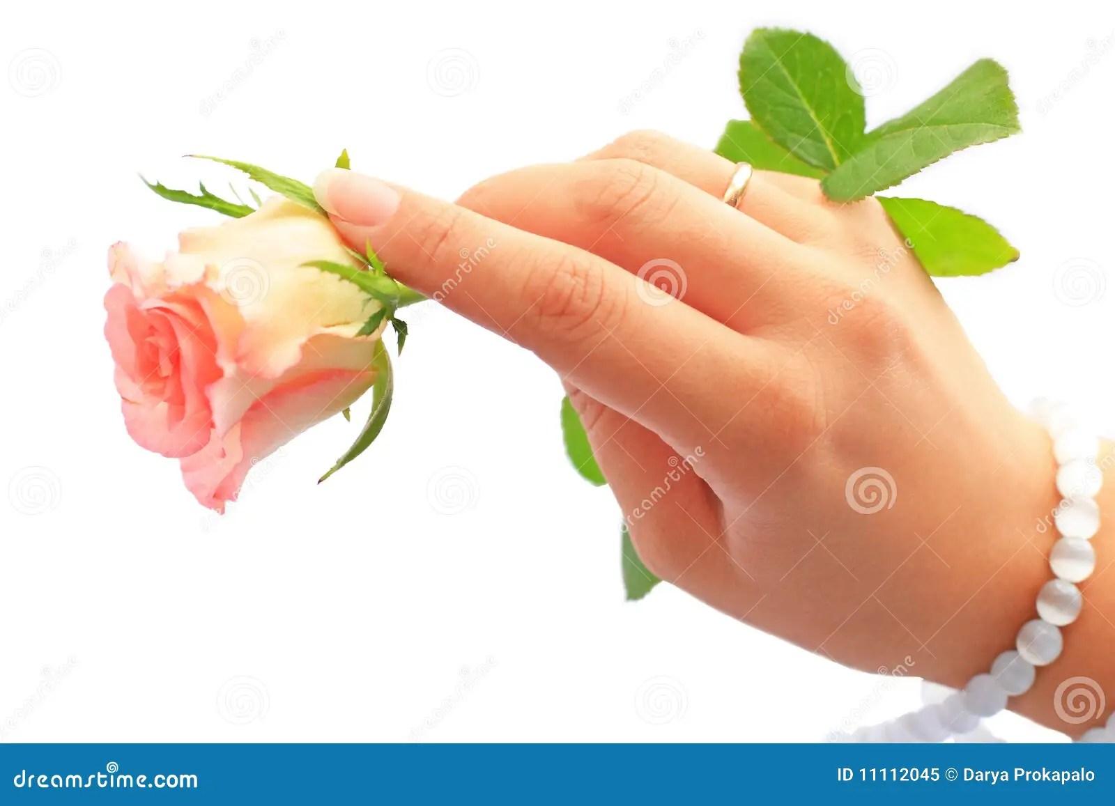 Hand Holding Rose Royalty Free Stock Photo Image 11112045