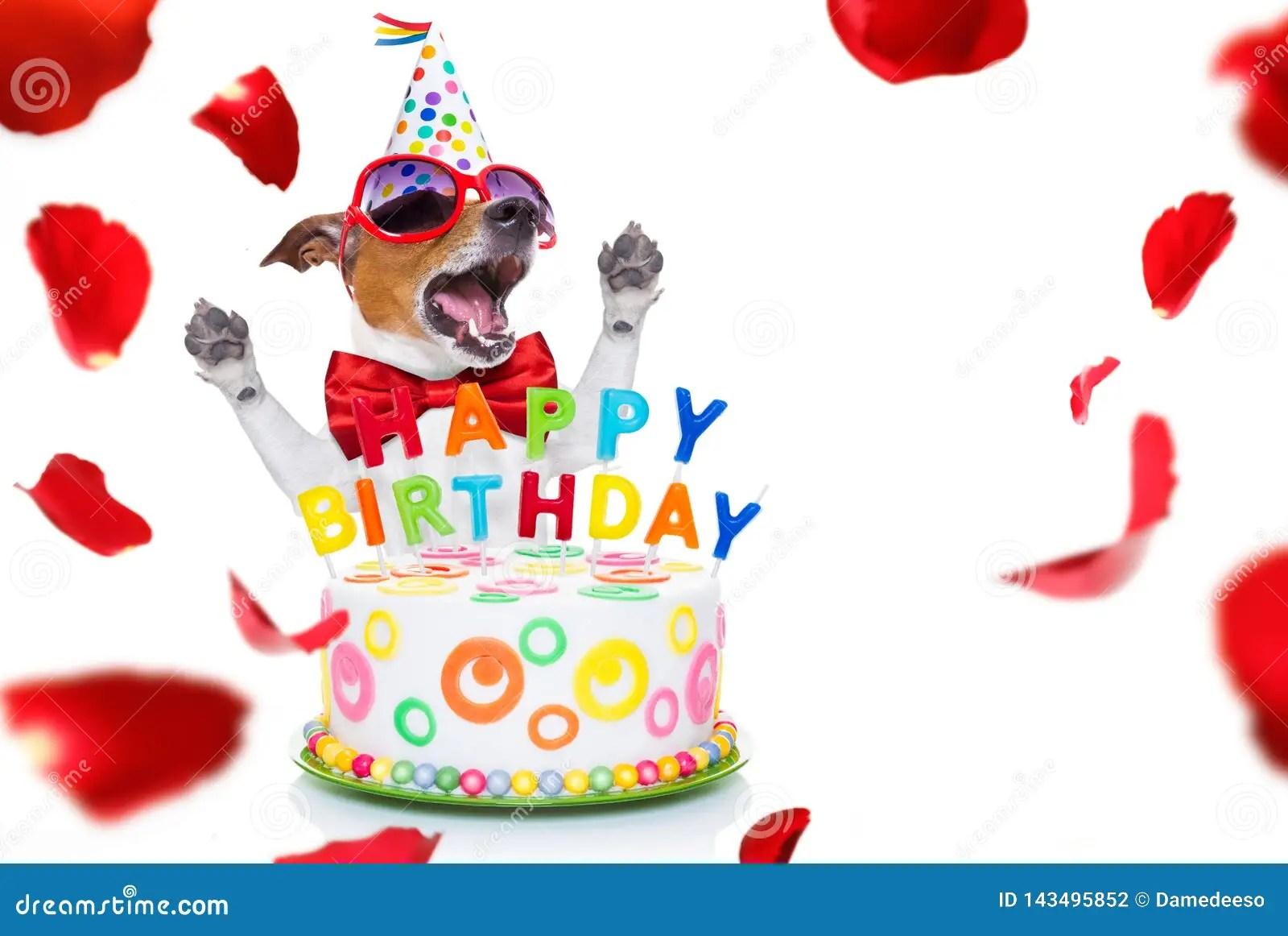 Happy Birthday Dog Stock Photo Image Of Laugh Funny 143495852