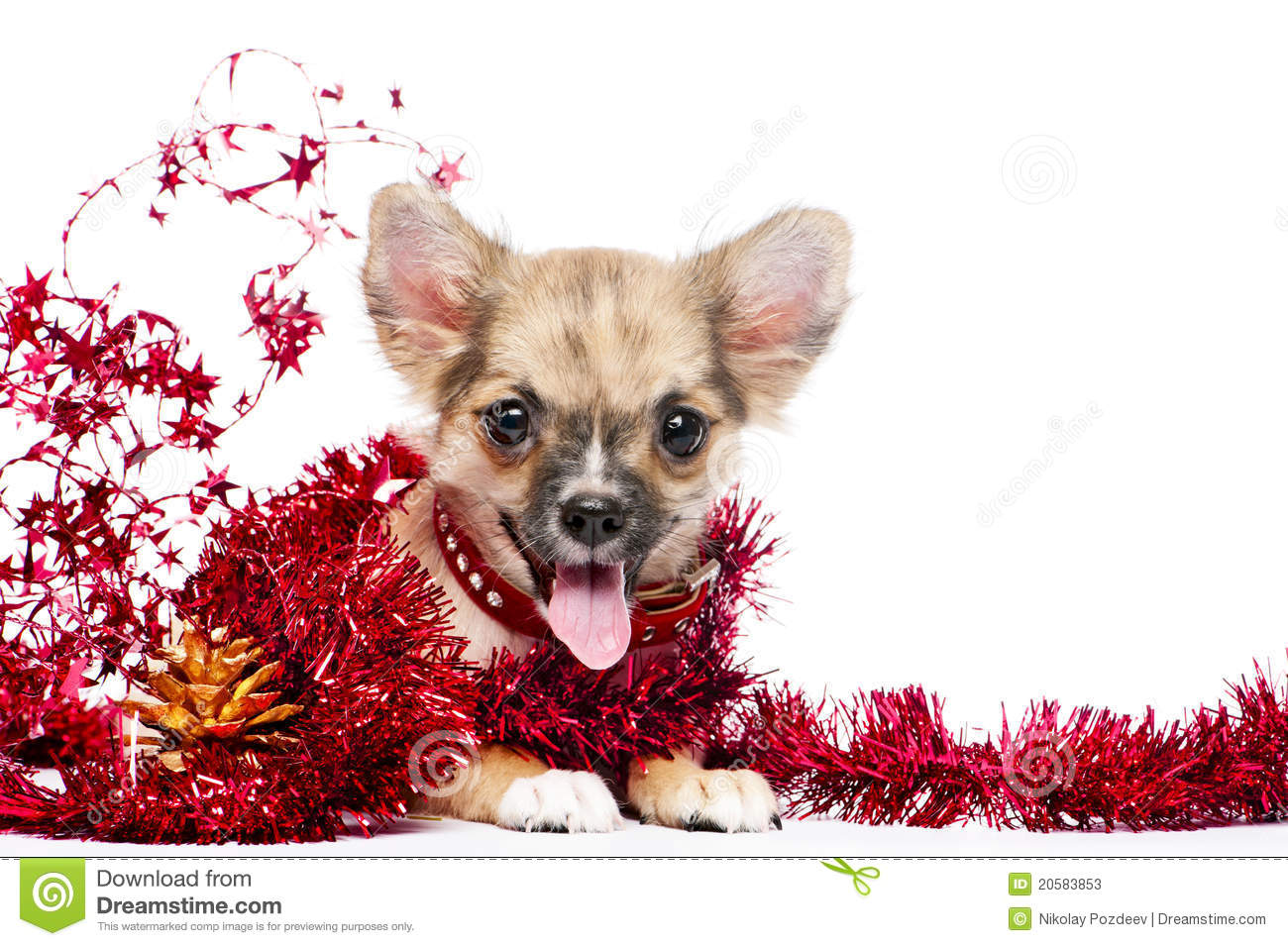 Happy Chihuahua Puppy In Frame Of Shining Tinsel Stock