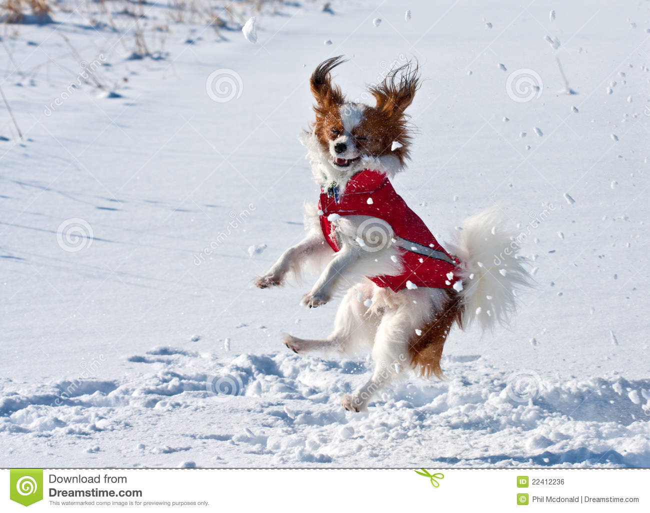 Happy Dog Royalty Free Stock Image Image 22412236