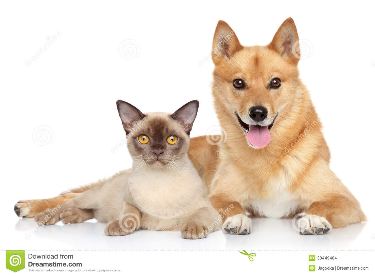 Happy Dog And Cat Together Stock Images Image 30449404