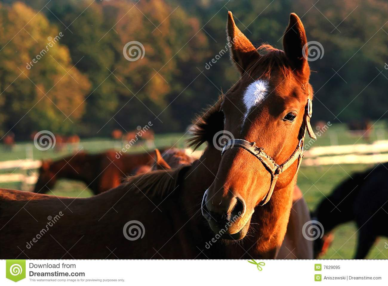 Head Of A Horse In The Sun Rays Stock Image