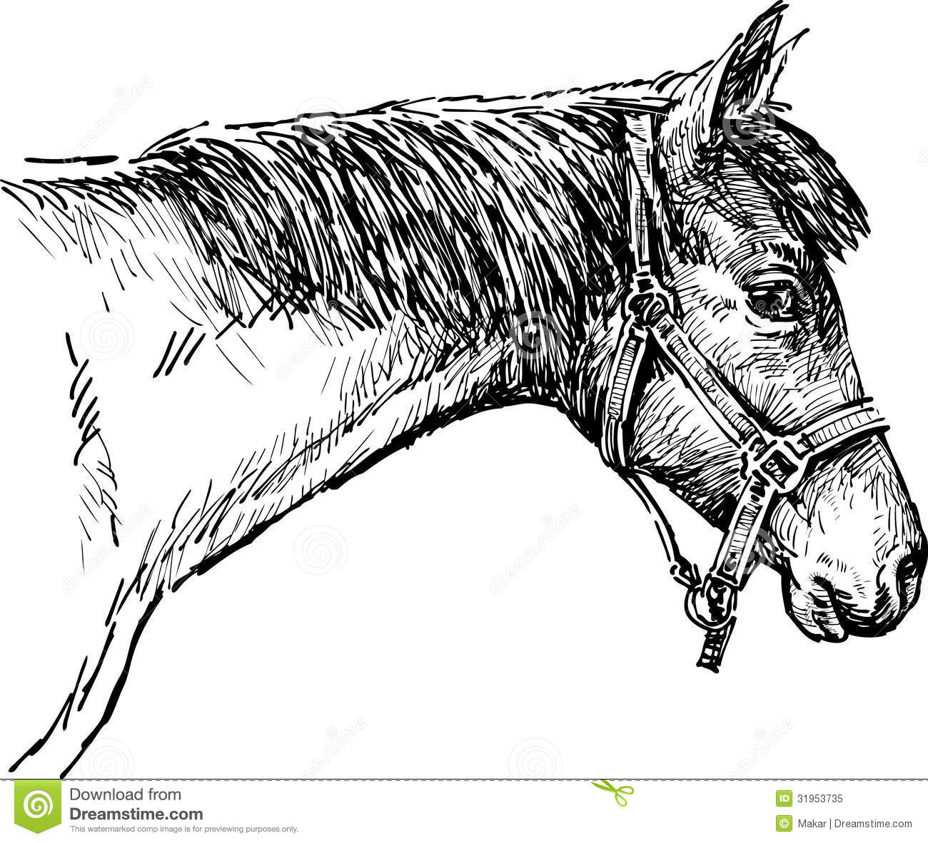 Head Of A Horse Stock Image Image Of Harnessed Ears