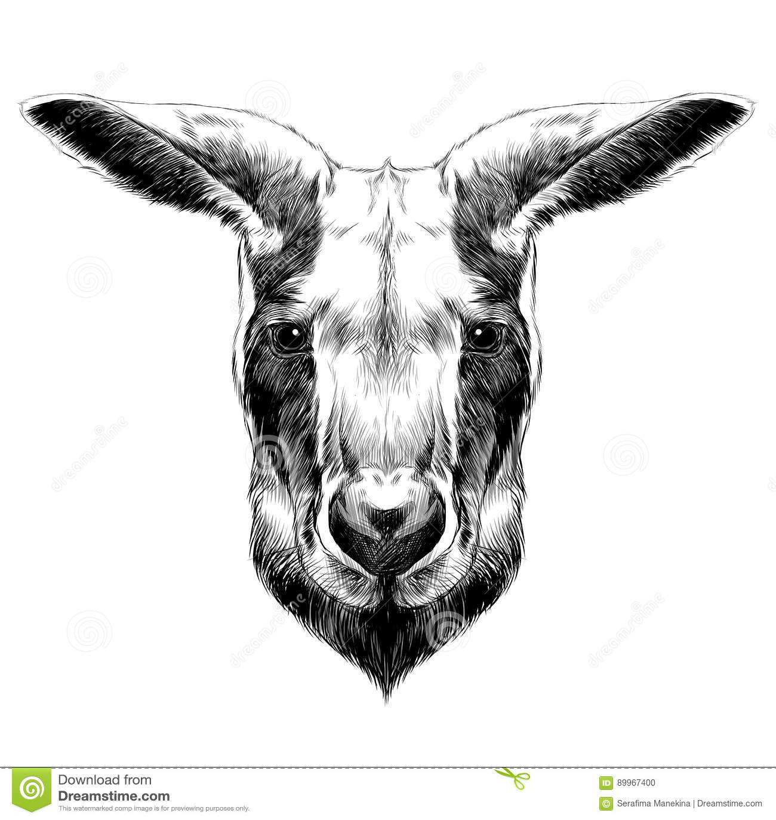 Vector Of A Kangaroo Head On White Background Cartoon Vector