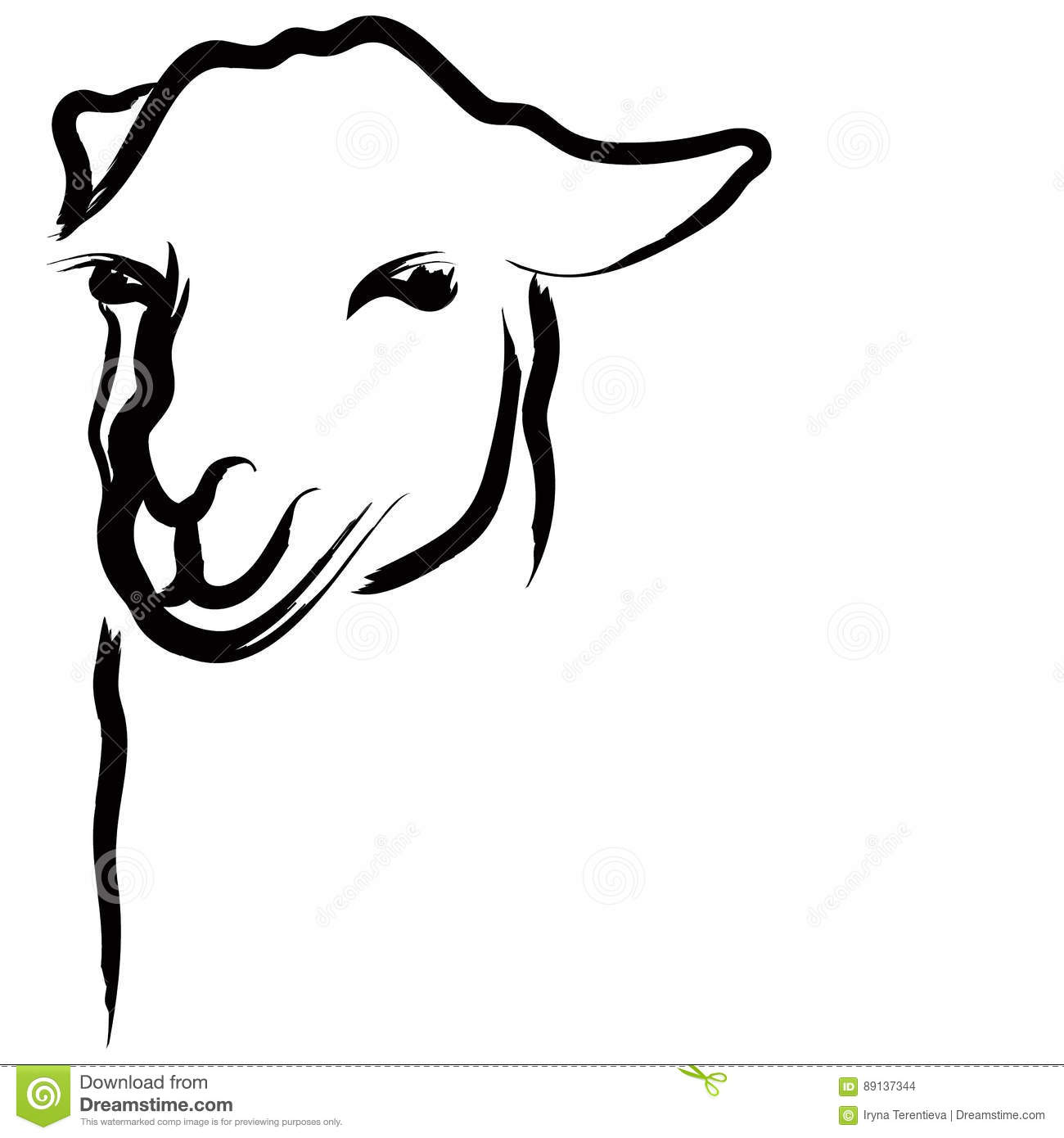 Alpaca Hand Drawn Vector Illustration On White Background