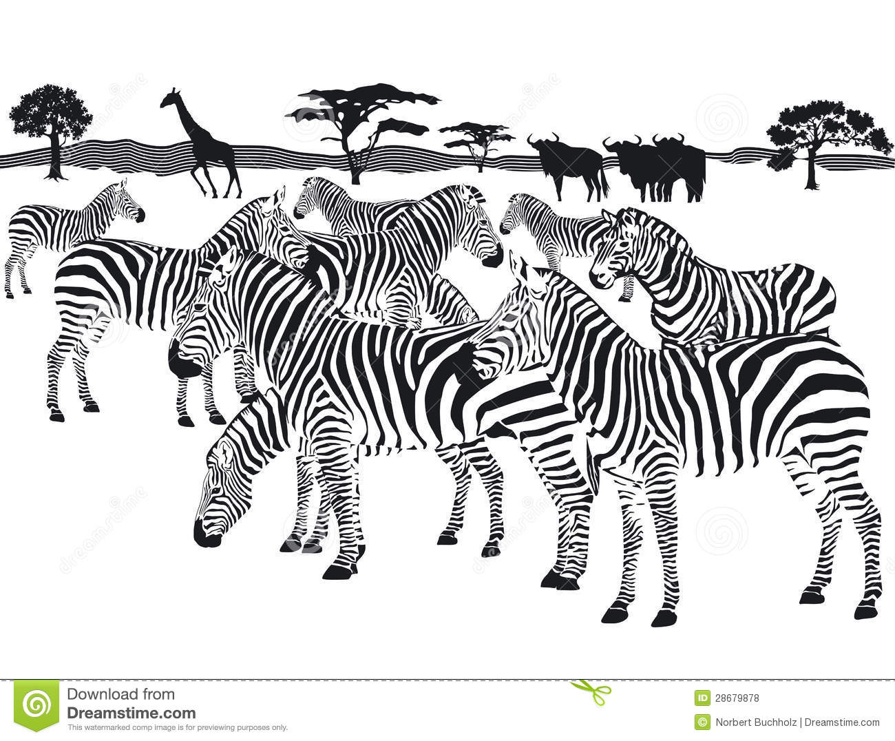 Herd Of Zebras Stock Vector Illustration Of Stripe