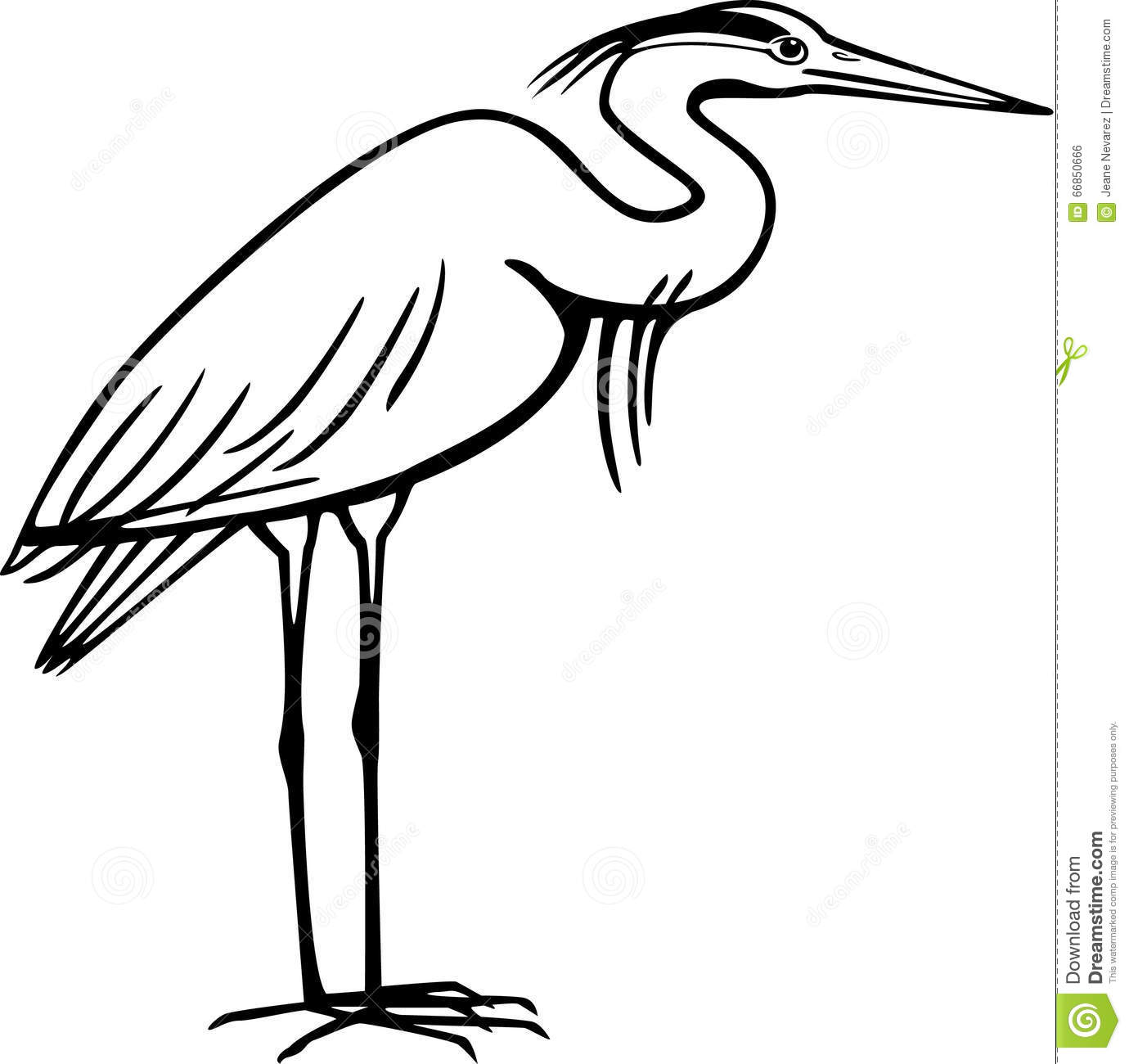 Heron Stock Vector Illustration Of Skinny Bird Great