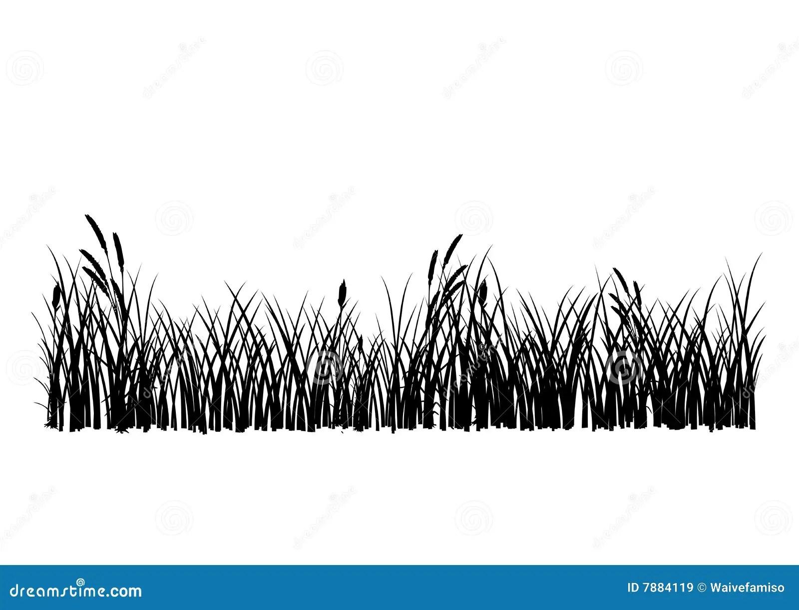 Hierba Del Vector Aislada Ilustracion Del Vector Imagen