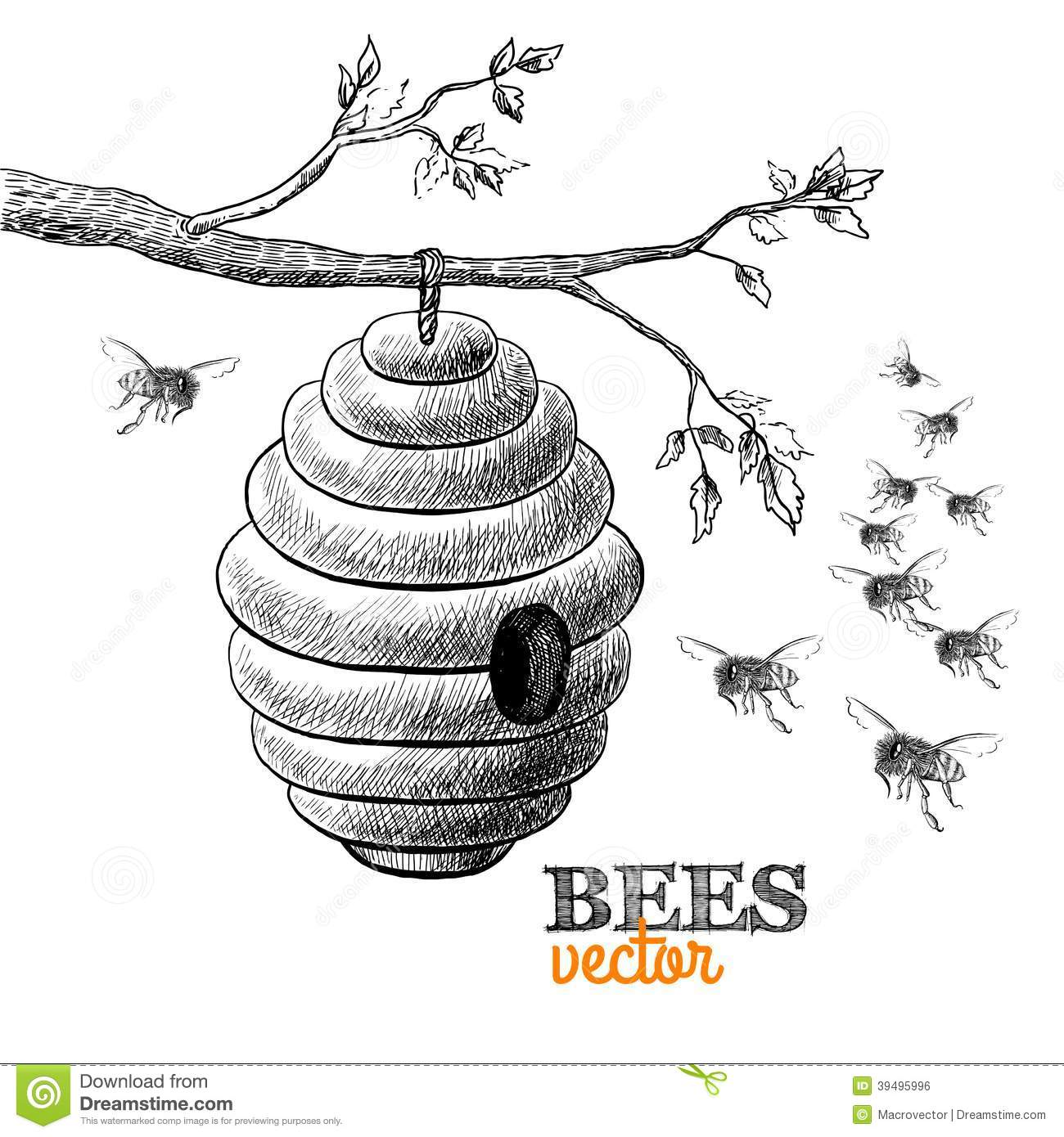 Honey Bees And Hive On Tree Branch Stock Vector