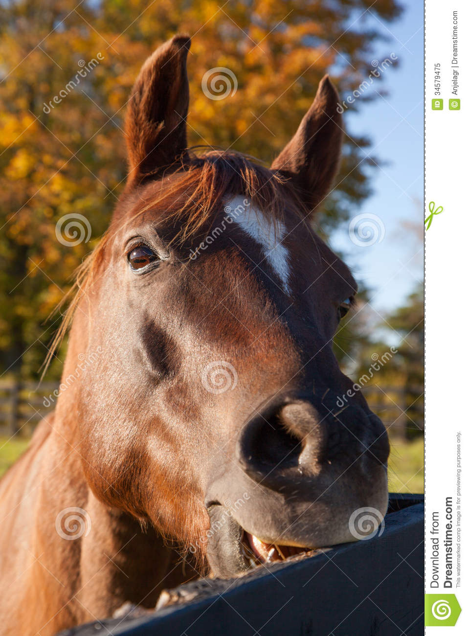 Horse Head Pictures Print