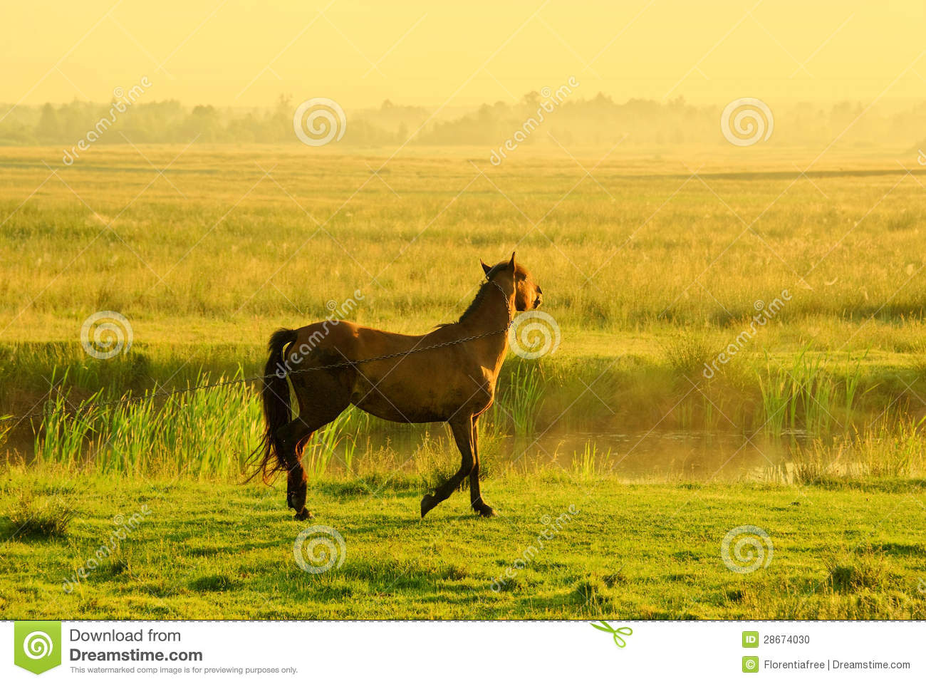 Horse Of A Rising Sun Stock Photo Image Of Equine