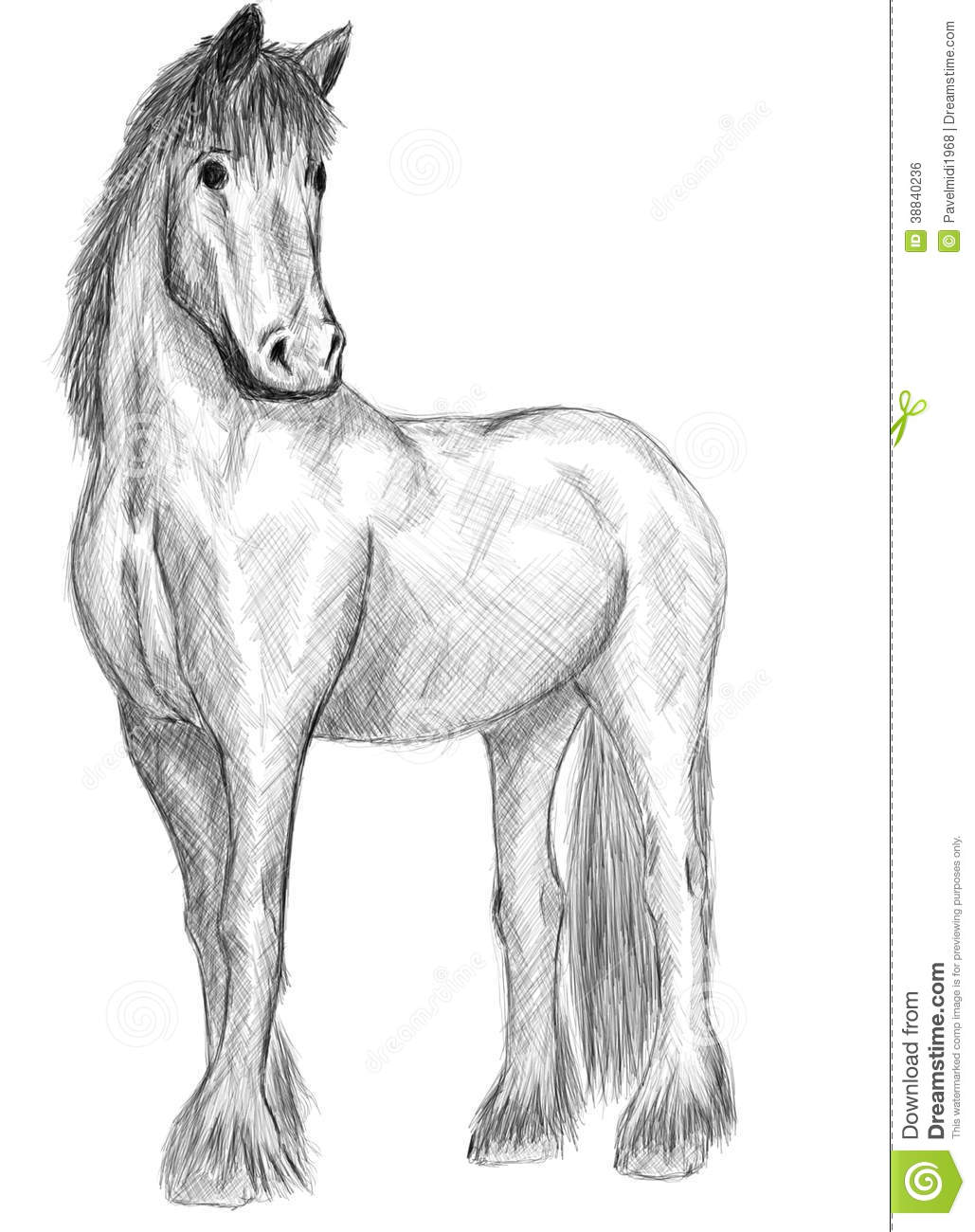 Horse Standing Stock Illustration