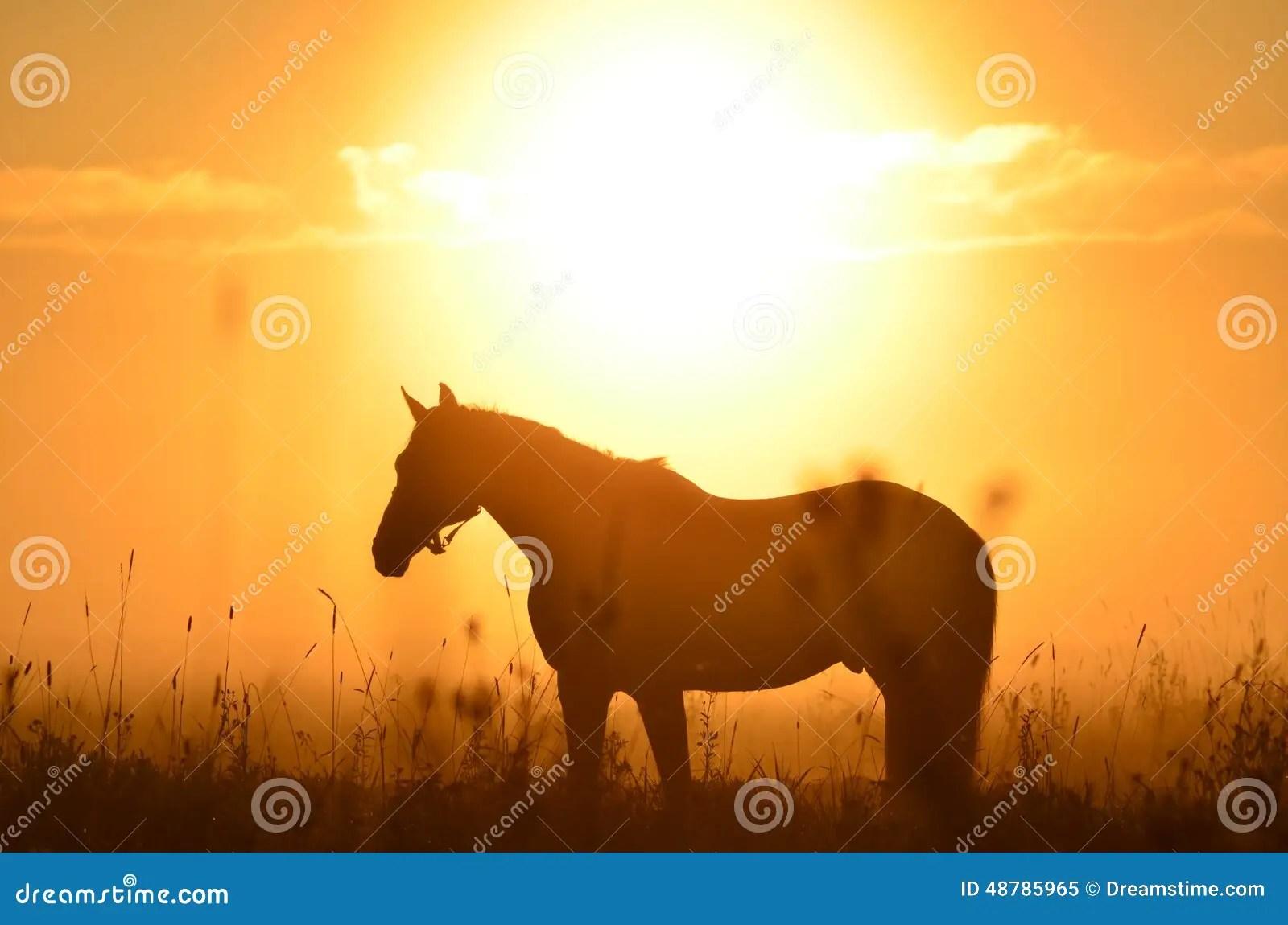 Horse And Sunrise Stock Photo