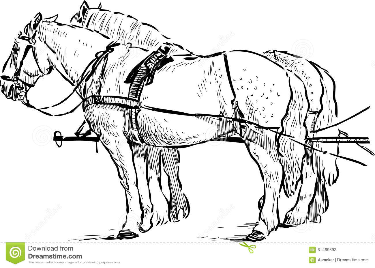 Horses In The Harness Stock Vector Illustration Of Tail