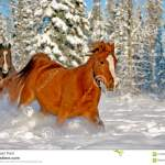 Horses Running In Snow Stock Photo Image Of Mammals 61306658