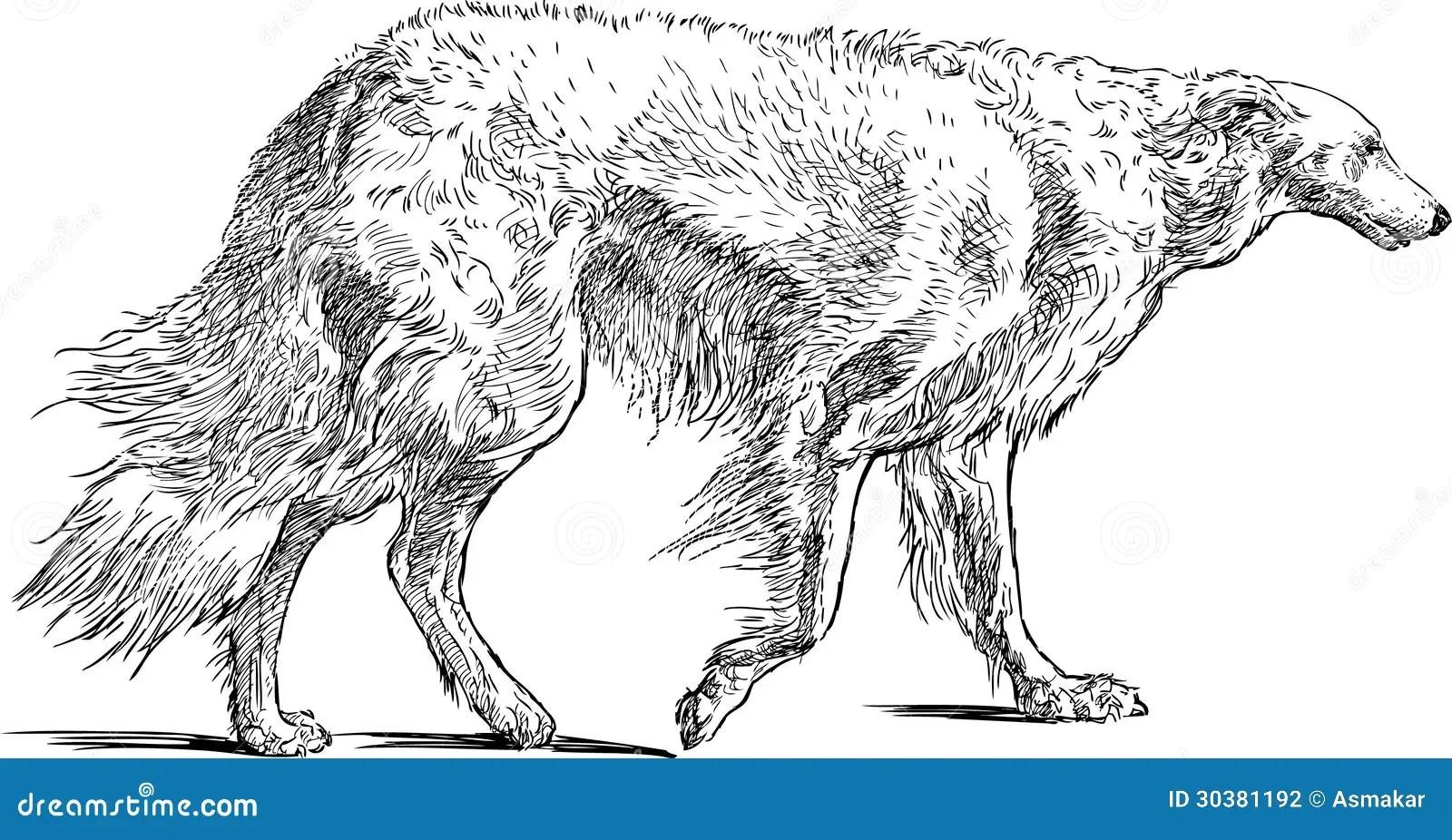 Hound Dog Stock Photography