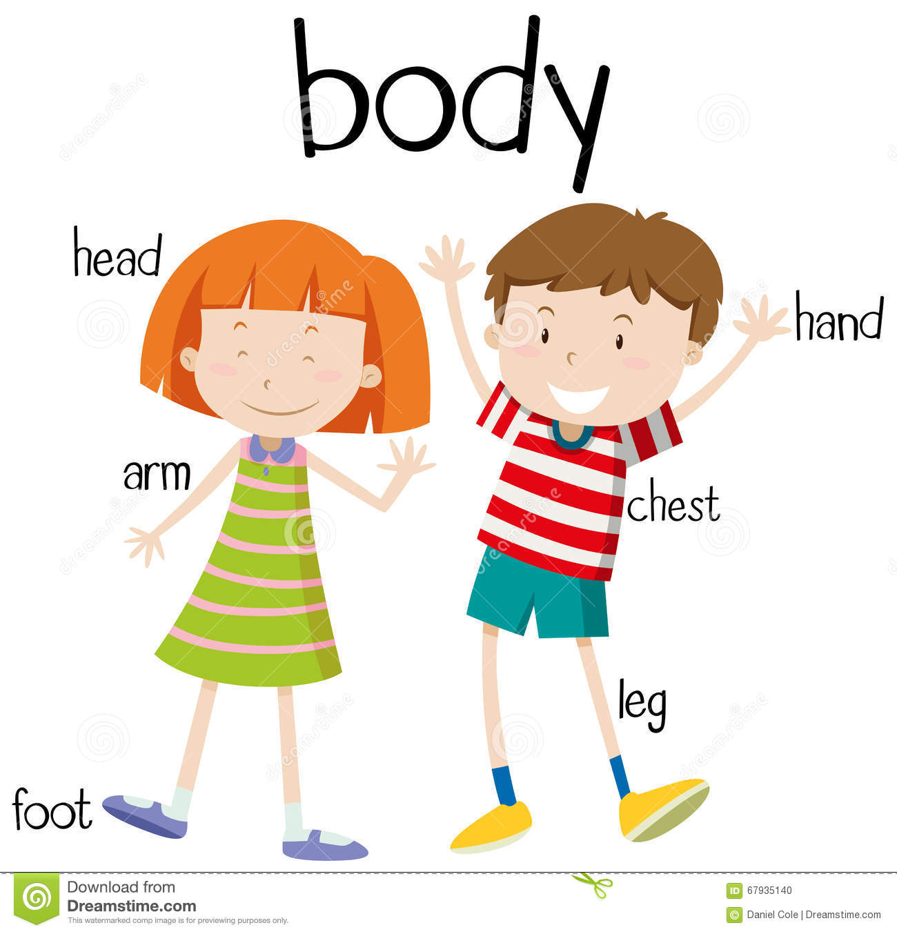 Human Body Parts Diagram Stock Vector Illustration Of