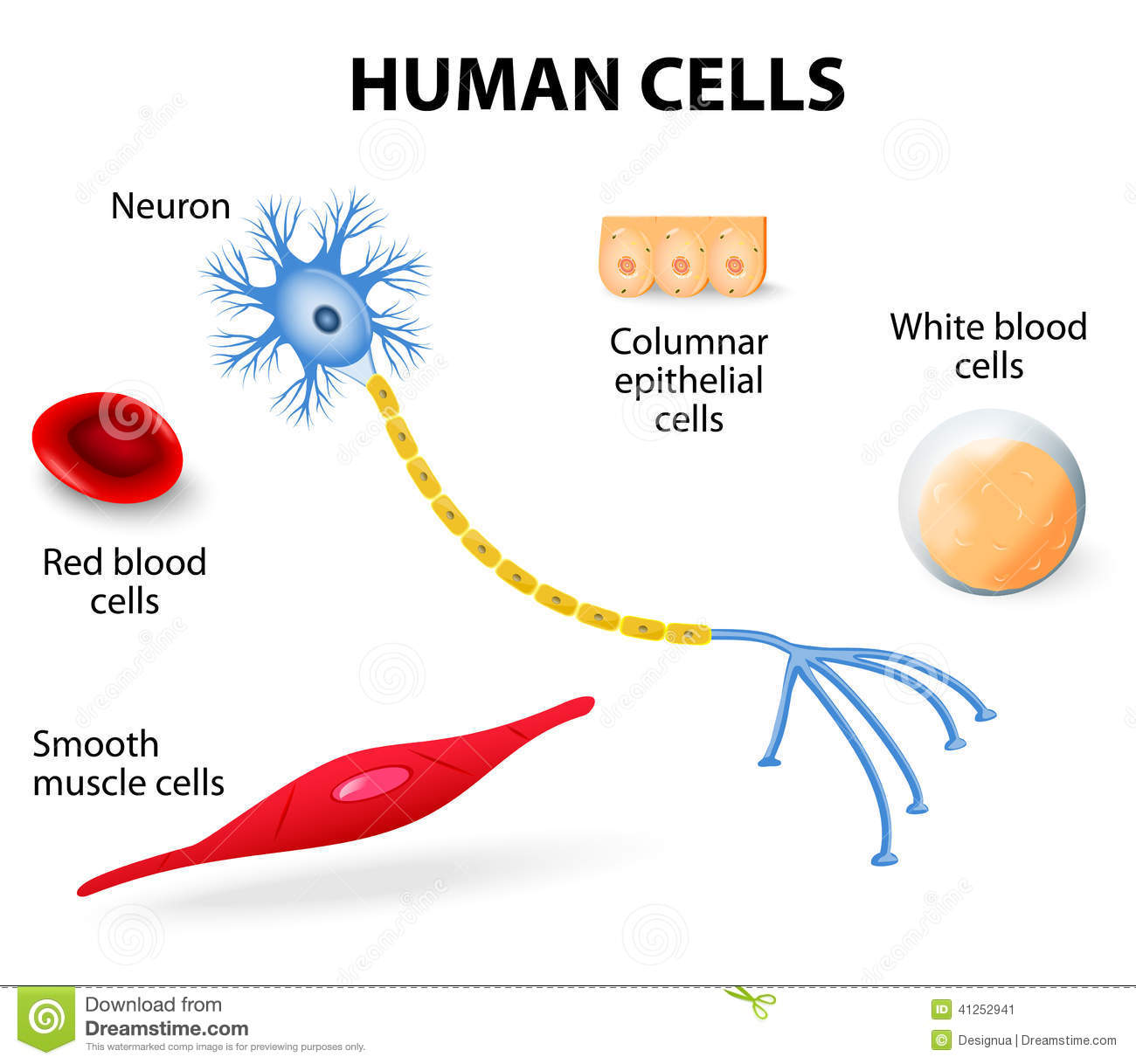 Human Cell Collection Stock Vector