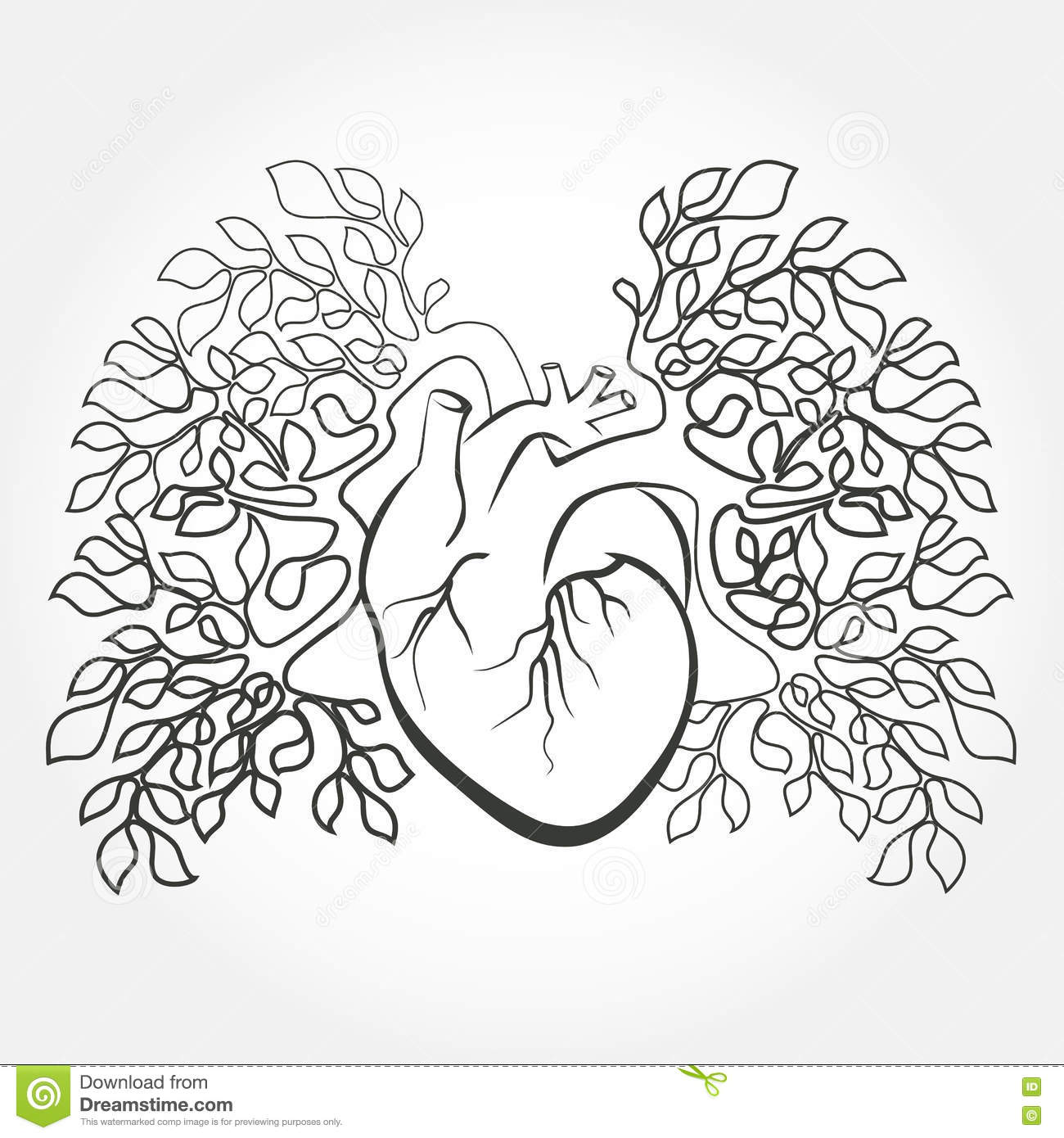 Human Heart And Lung Diagram