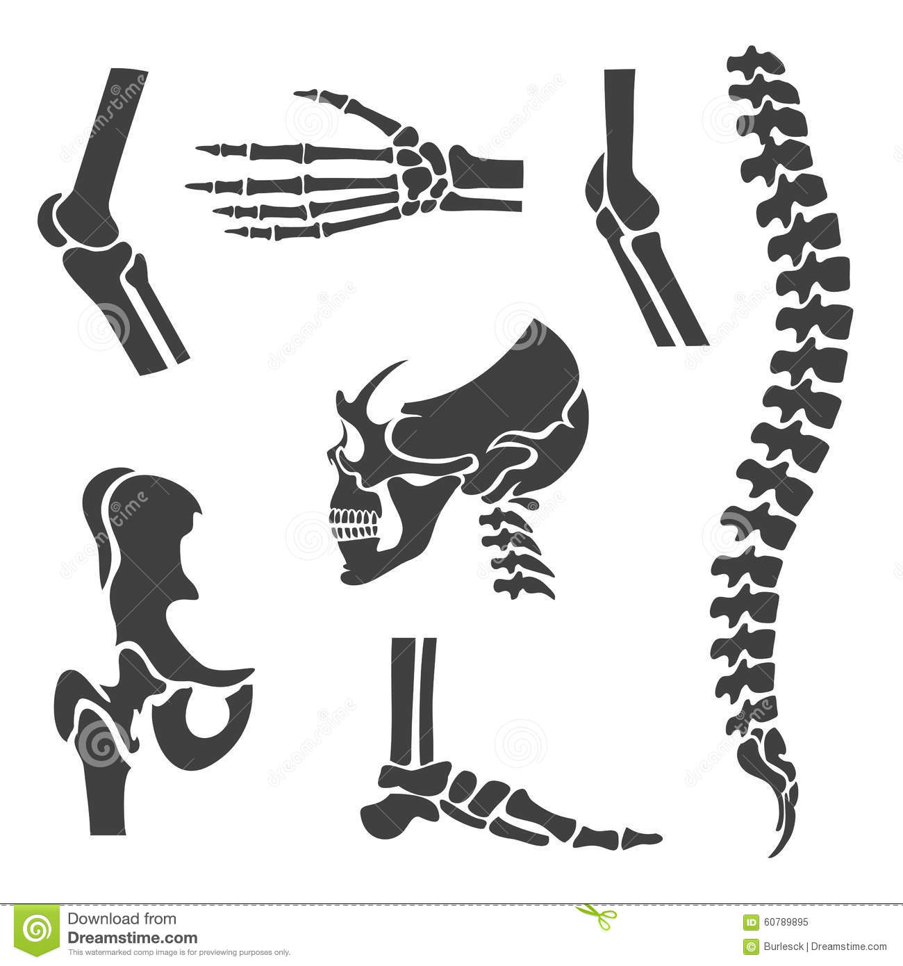Human Joints Vector Set Orthopedic And Spine Cartoon Vector